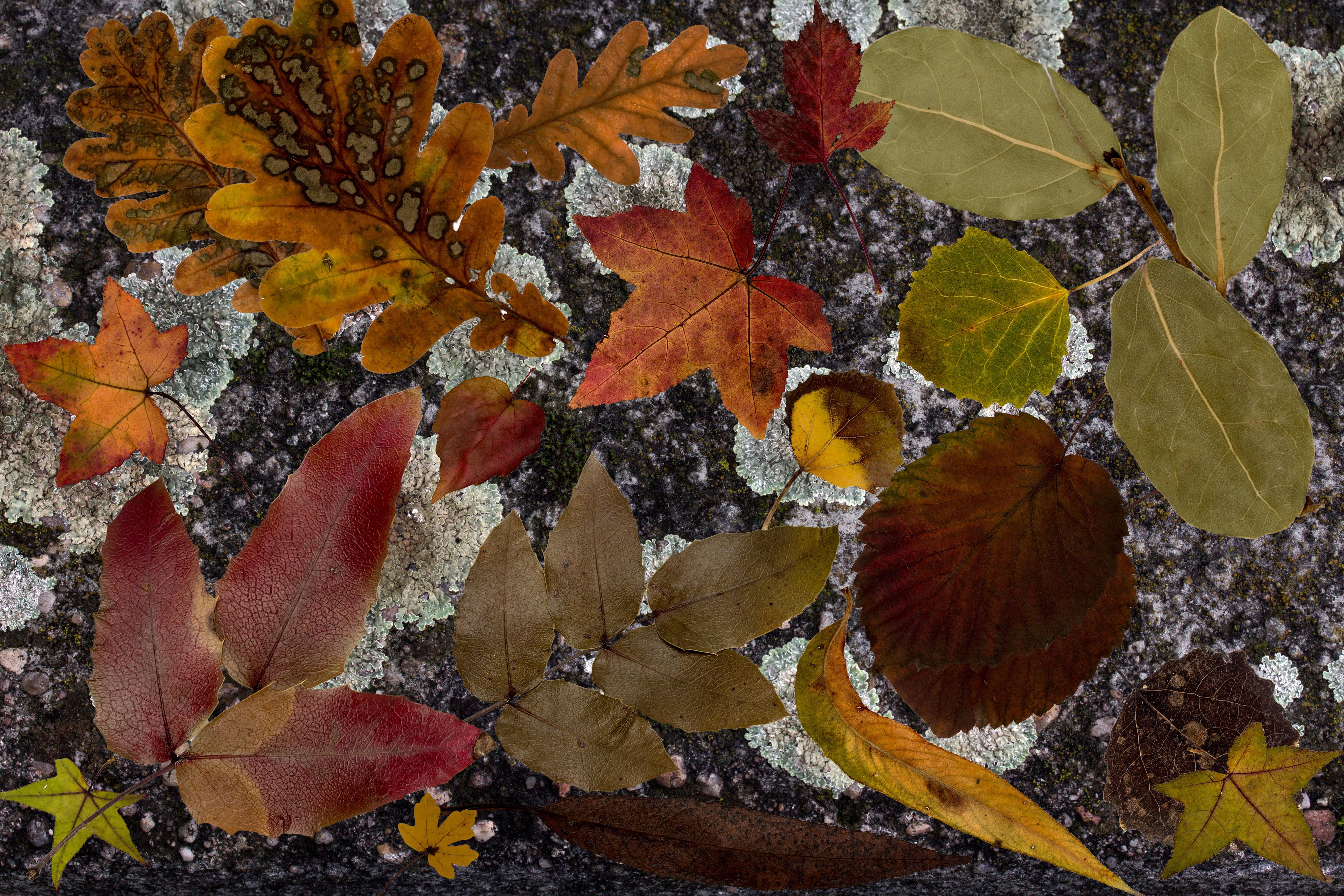 Fotoğraf Ağaç Yapı Yaprak çiçek Don Kuru Yeşillik Botanik