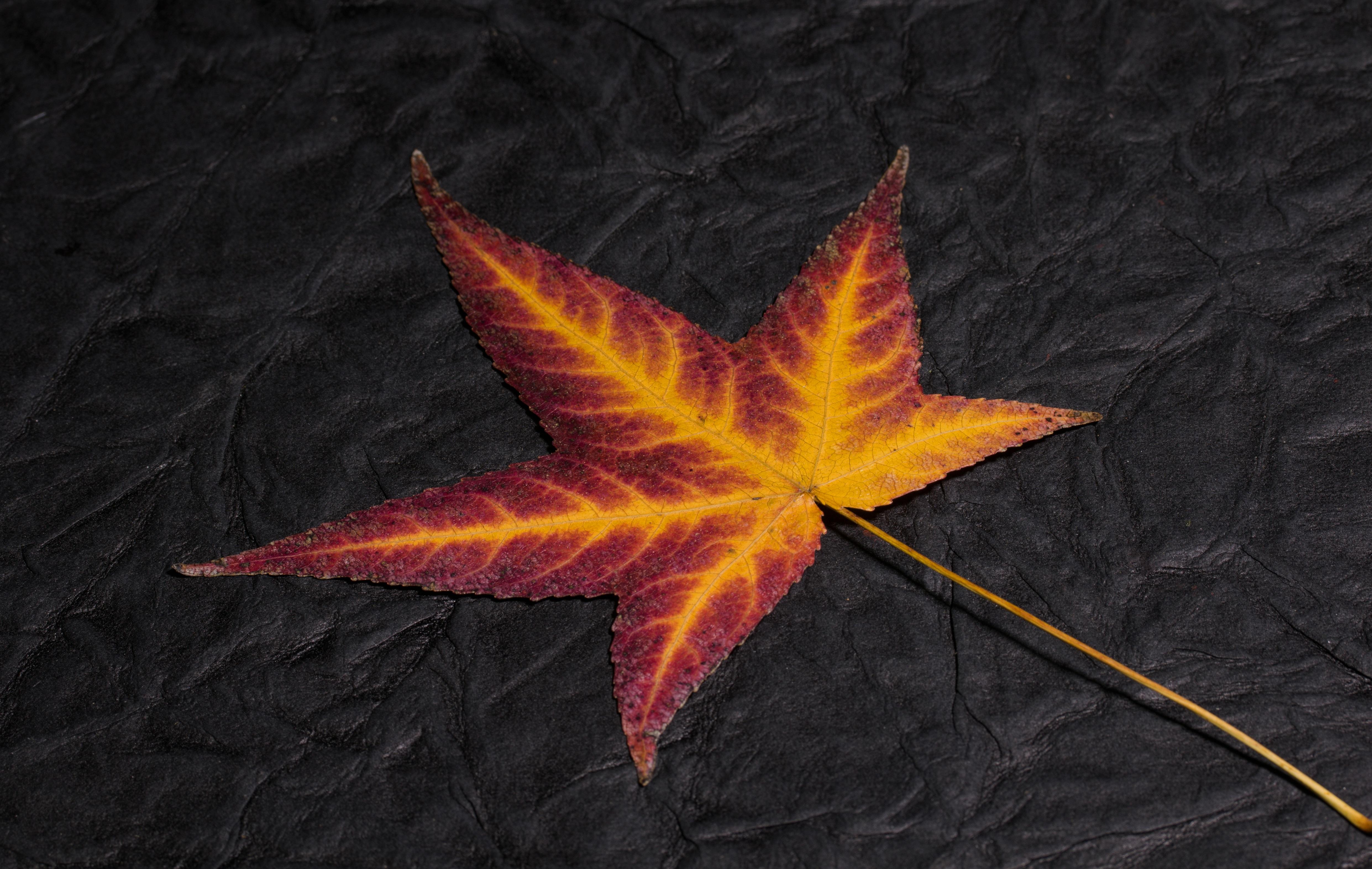 Fotos gratis : estructura, estrella, flor, rojo, vistoso, amarillo ...