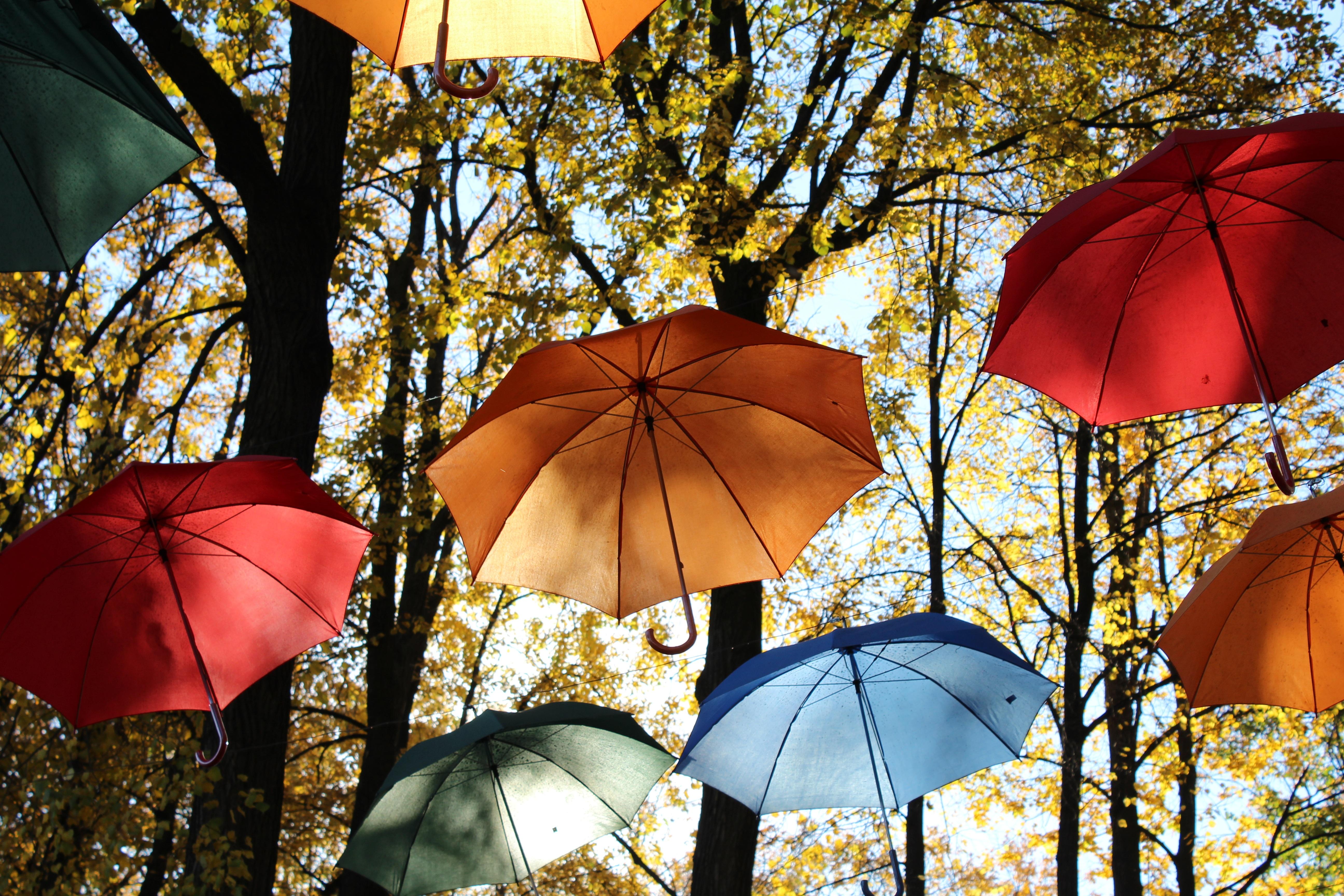 биологического происхождения, осень зонт солнце фото дизайн