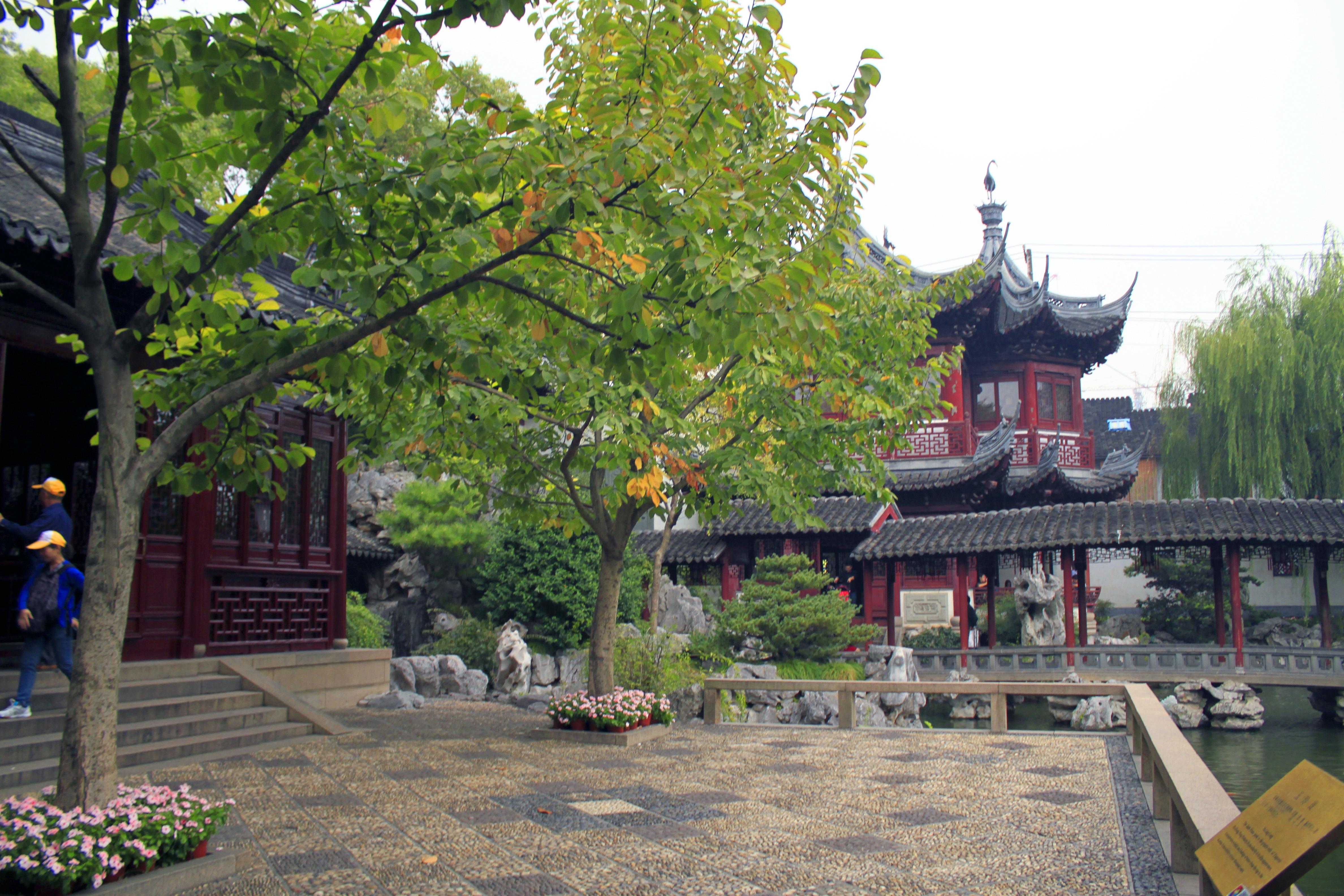 Gratuites arbre ville b¢timent vert chinois Naturel