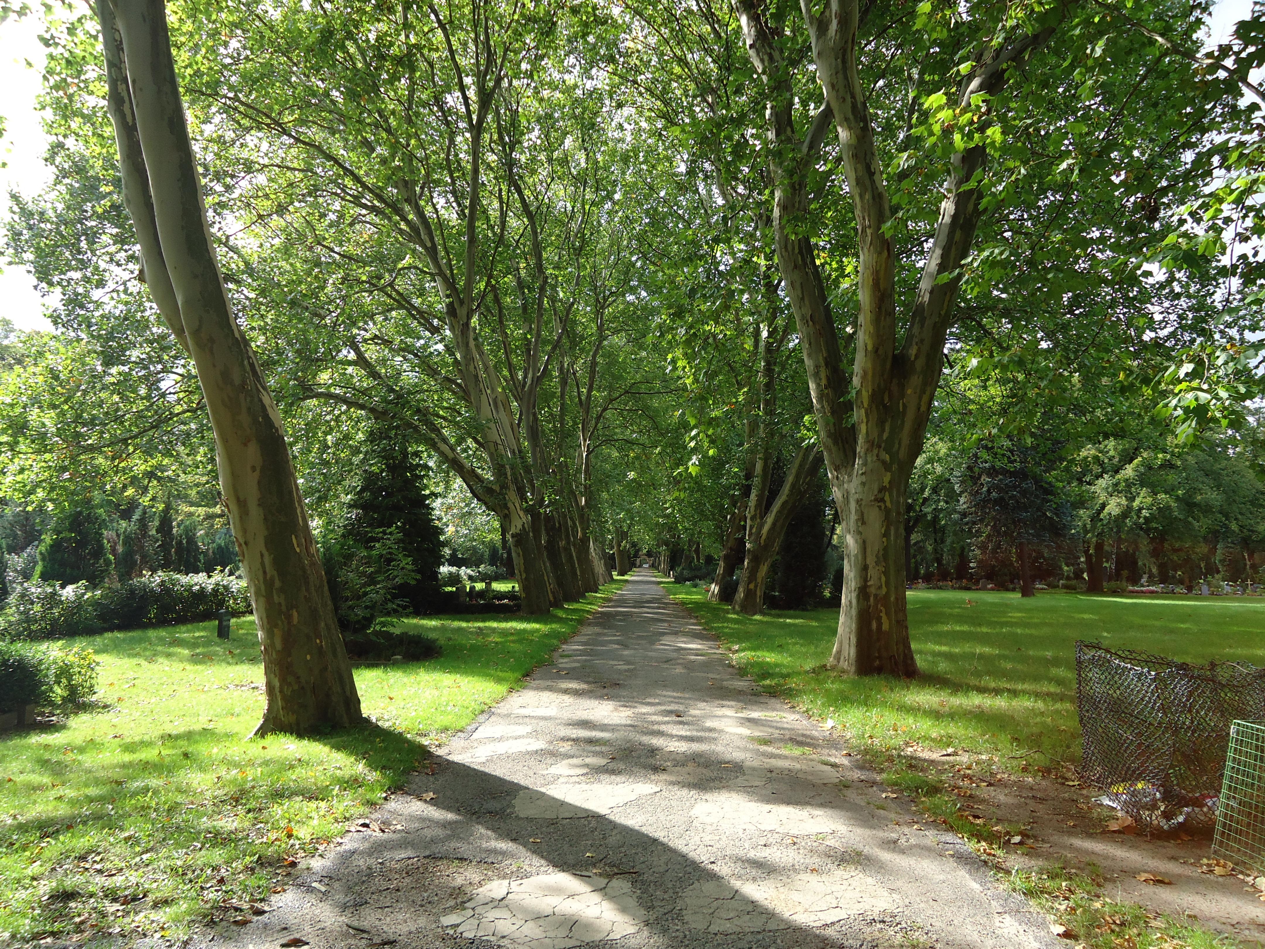 Fotos gratis rbol sendero c sped pasarela verde for Arboles jardin botanico