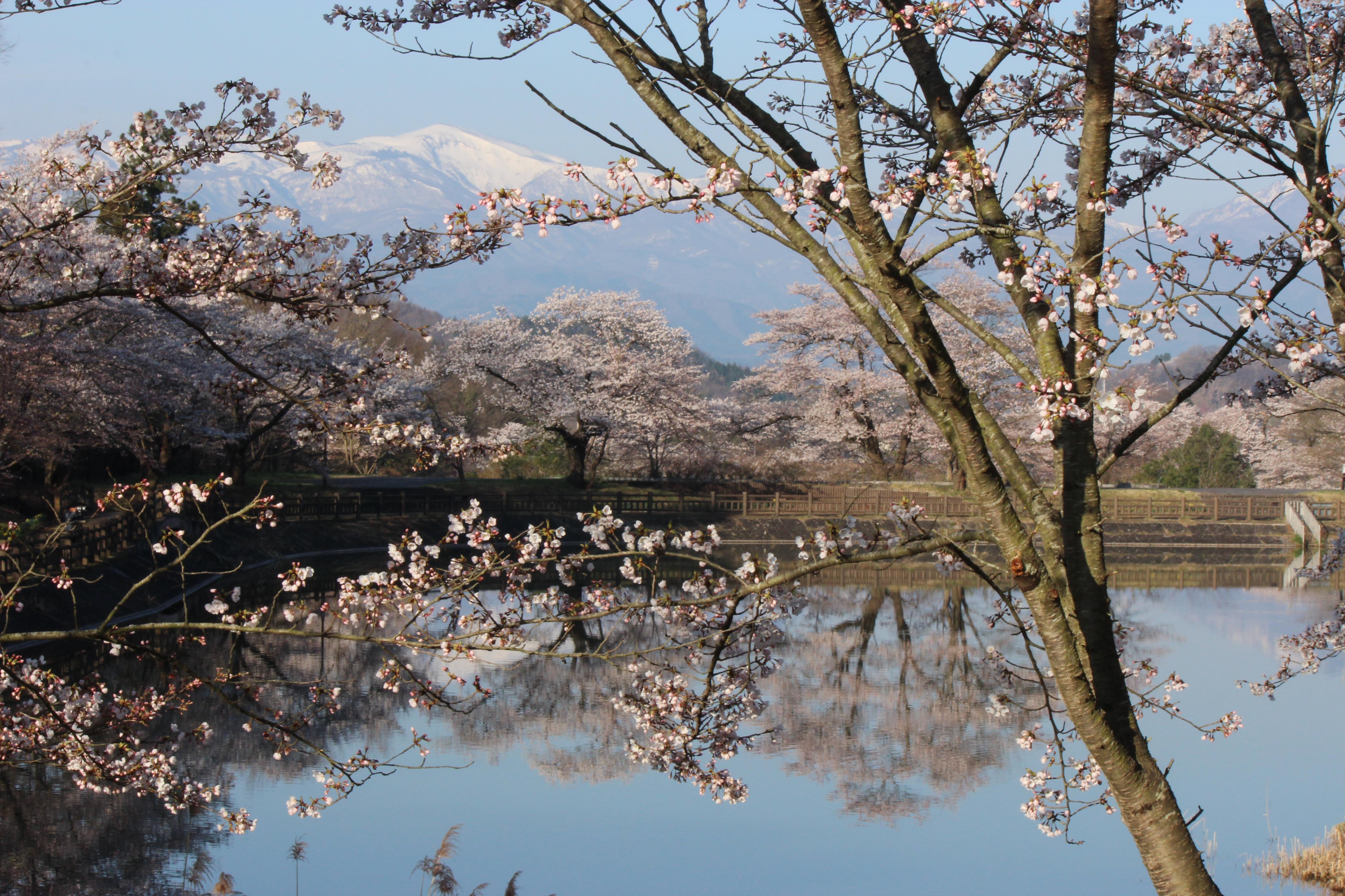 Images gratuites arbre eau branche neige hiver for Koi teich winter