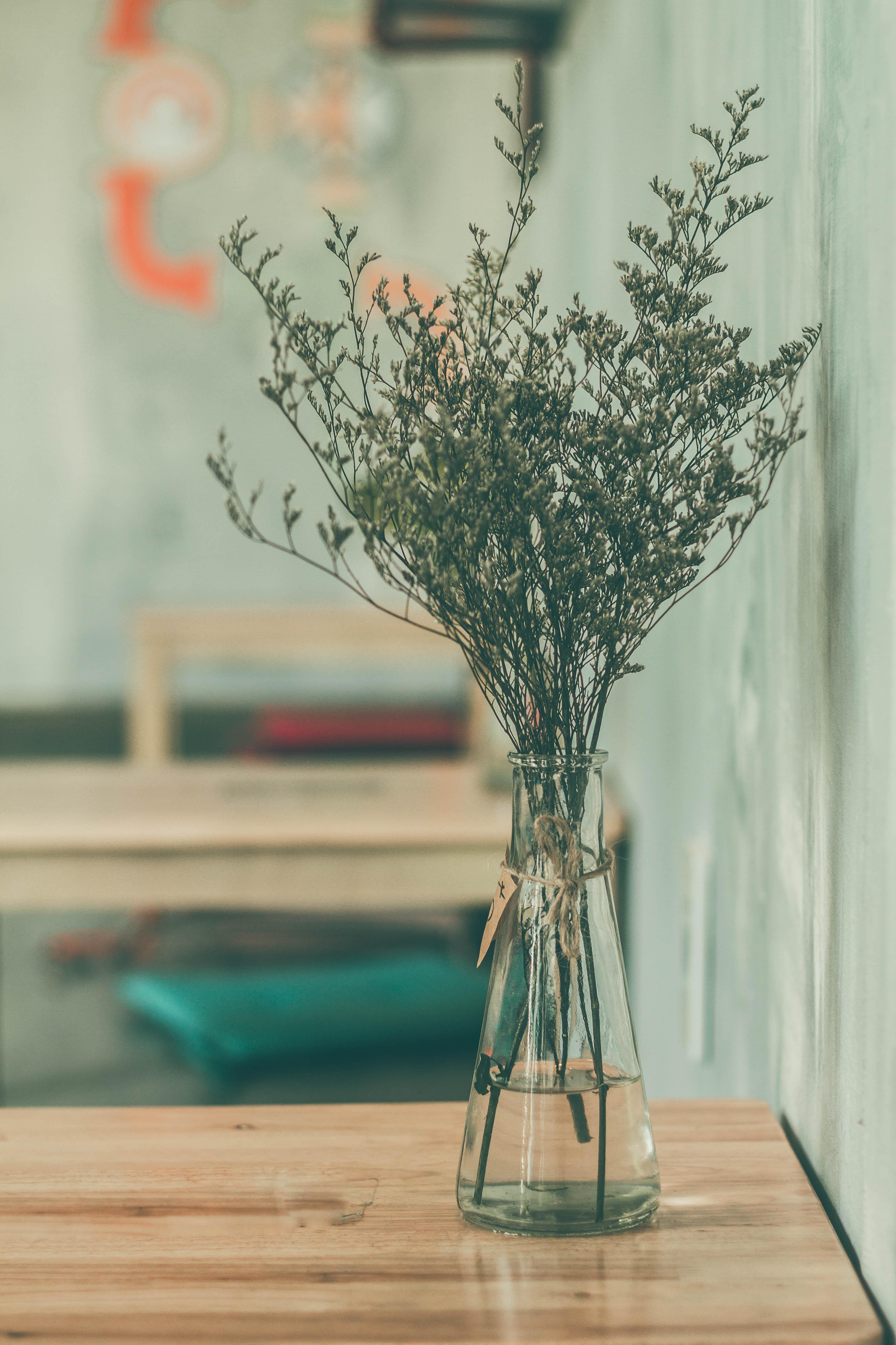 무료 이미지 나무 분기 흐림 식물 복고풍의 잎 꽃 유리 병 장식 봄 녹색 색깔