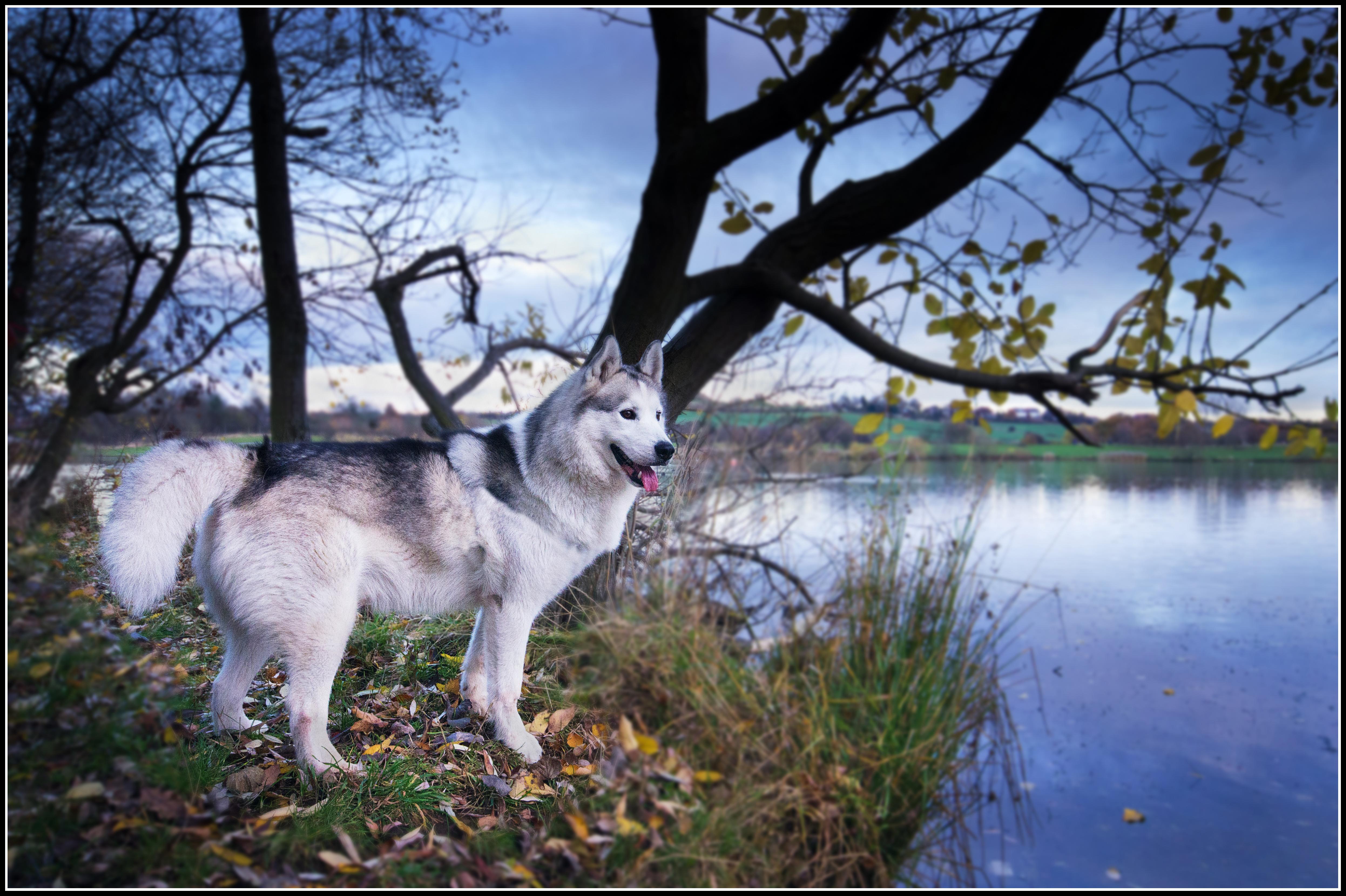 Fotos gratis : árbol, agua, rama, lago, mojado, animal, orilla ...