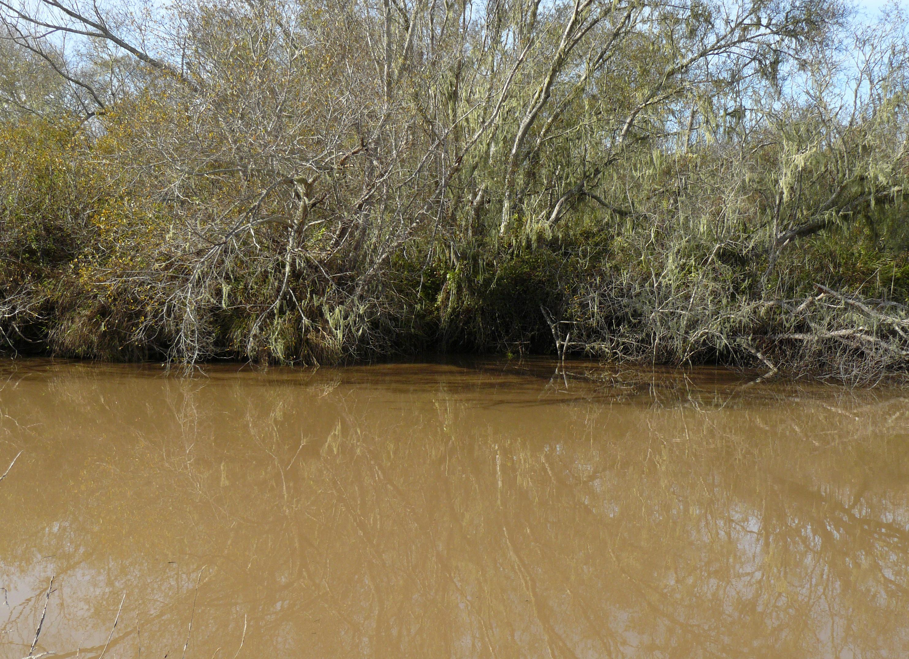Осос на реке