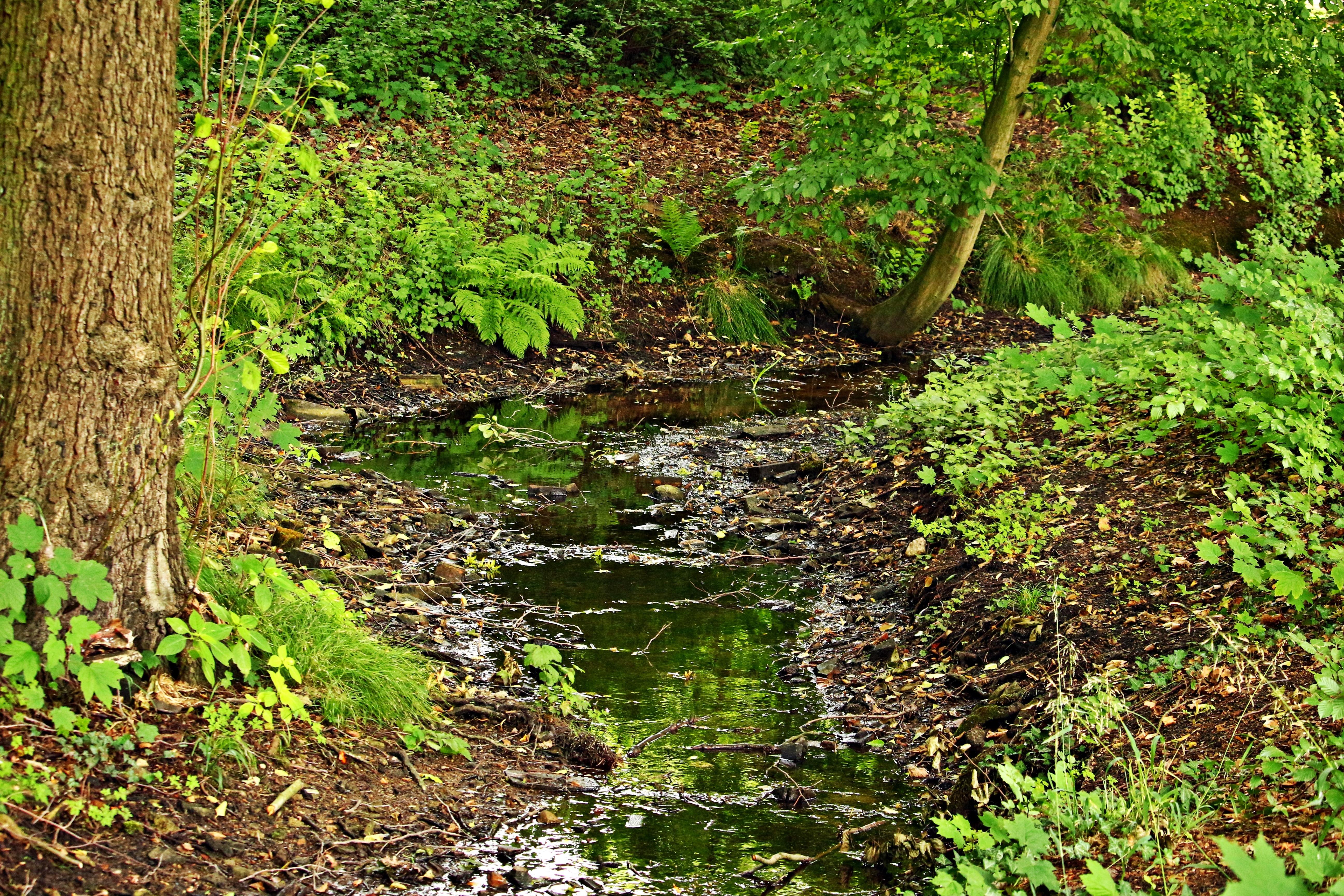 Fotos gratis rbol agua bosque c sped pantano for Carson bosque y jardin