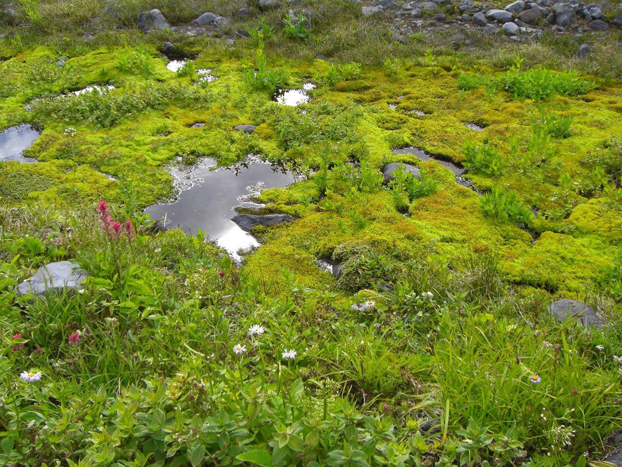 картинка болота с мхом