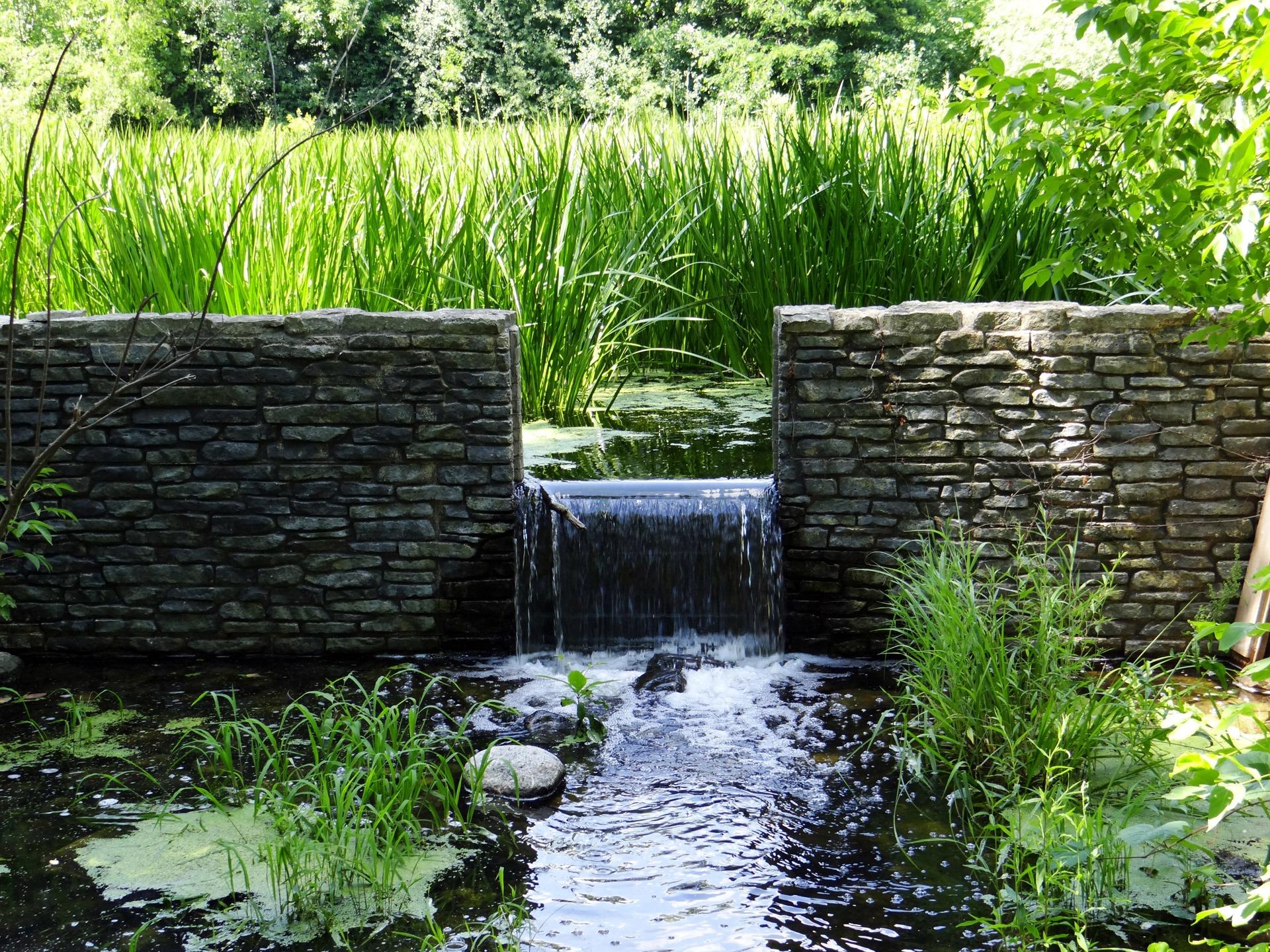 Fotos gratis rbol c sped cascada pared pasarela for Peces para fuente exterior