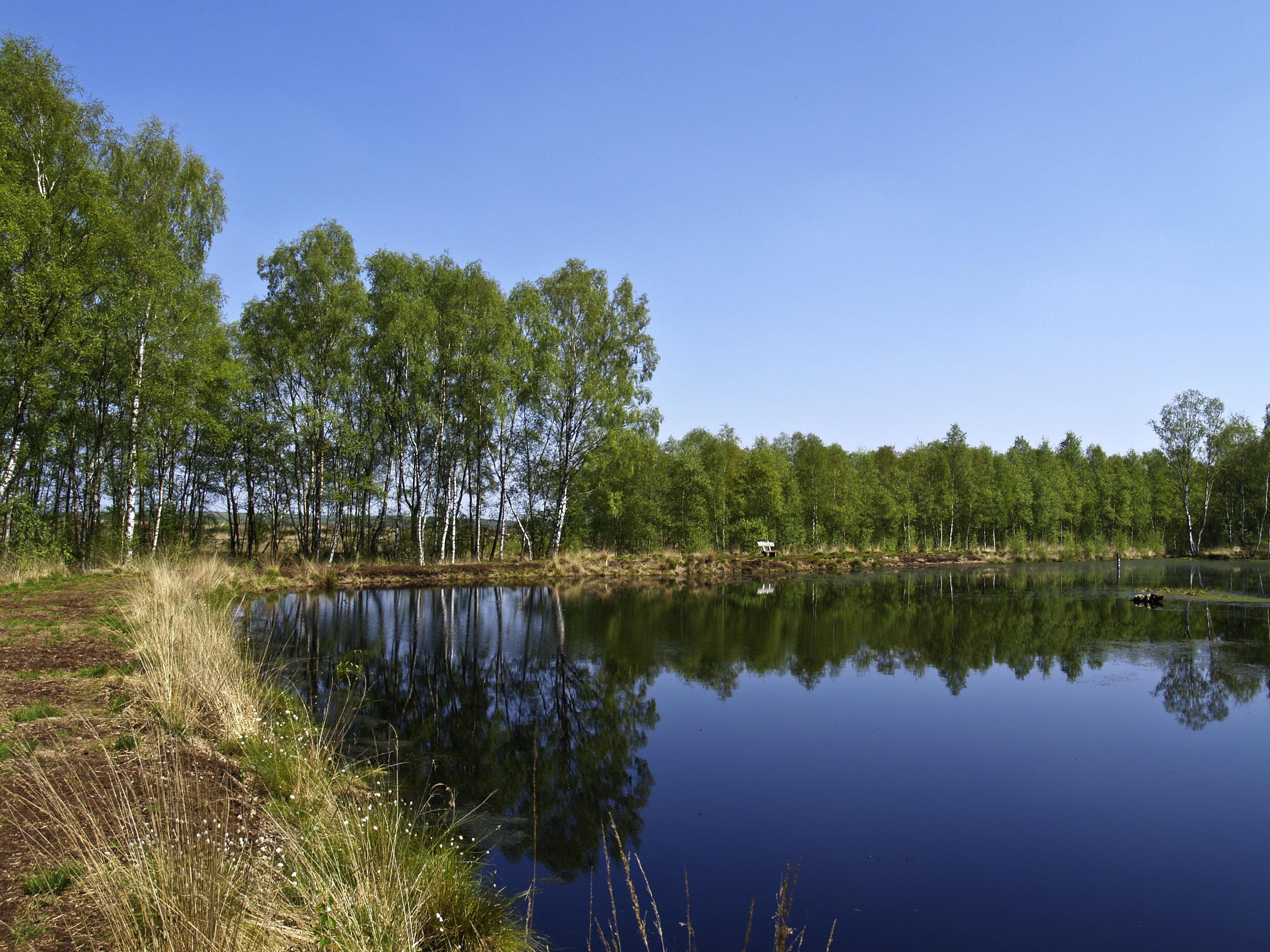 Kostenlose Foto Baum Wasser Sumpf Wildnis Wiese See