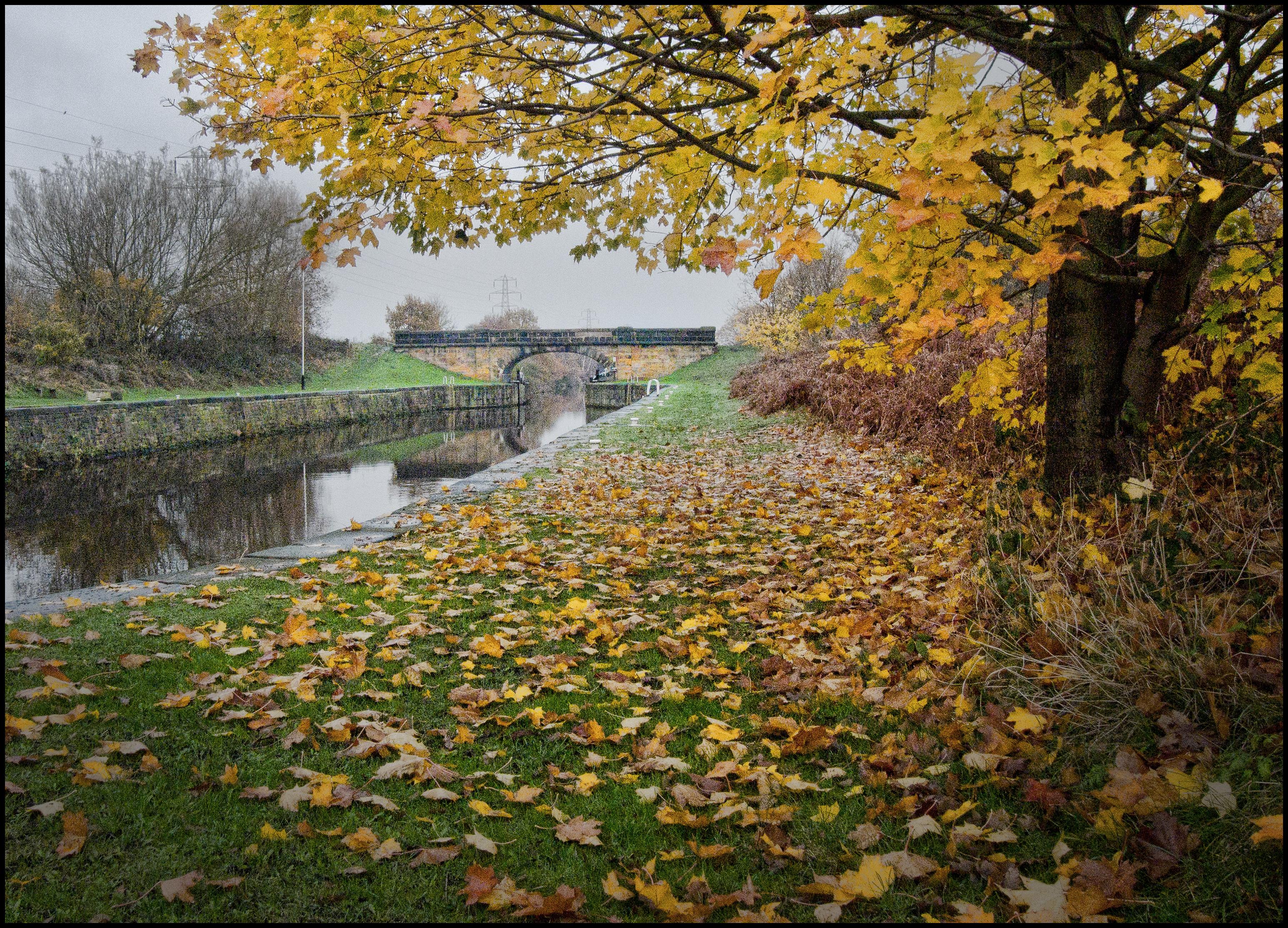 Kostenlose foto : Baum, Wasser, Natur, Ast, Boot, Brücke, Blatt ...