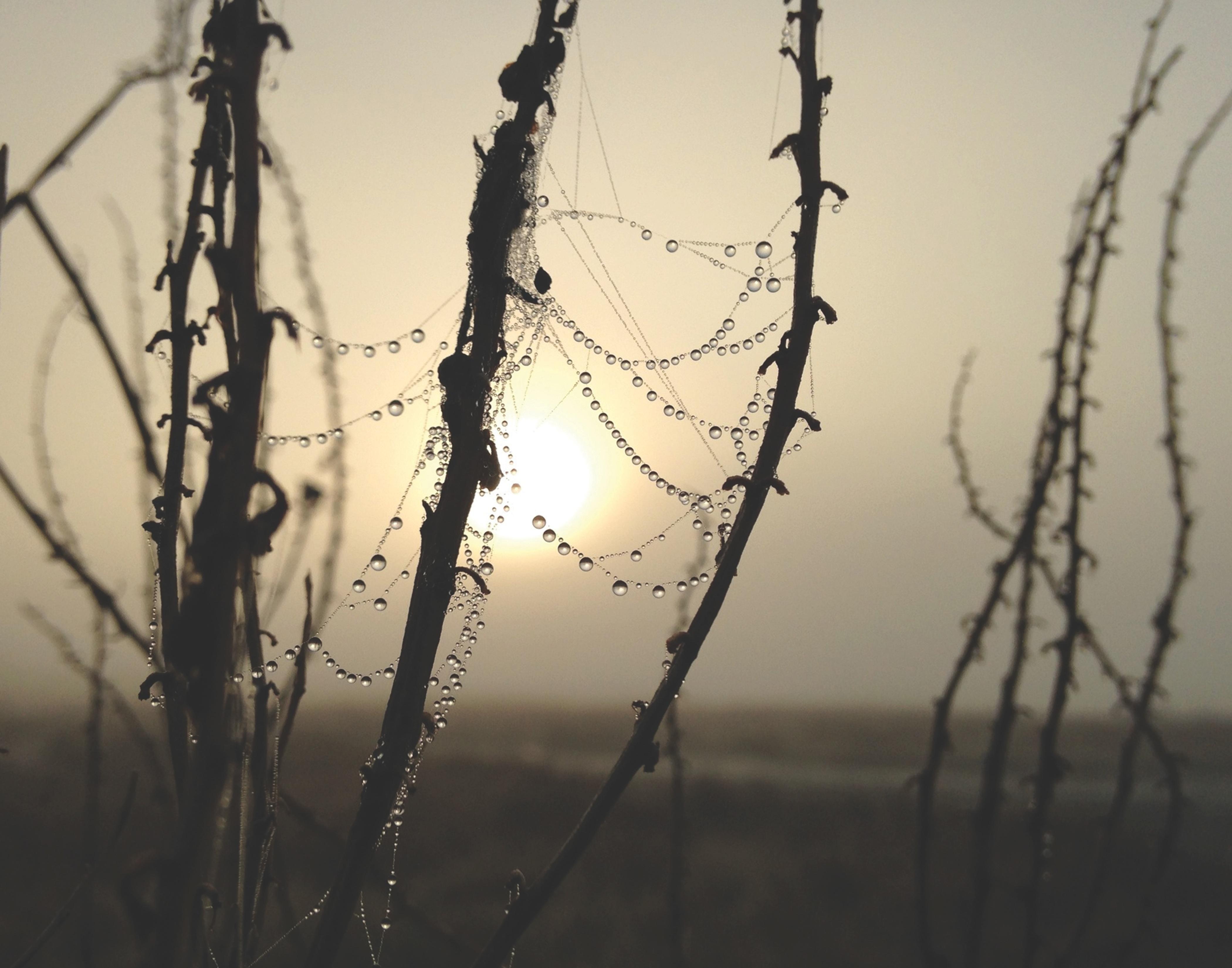 Kostenlose Foto Baum Wasser Natur Ast Winter Tau Licht Zaun