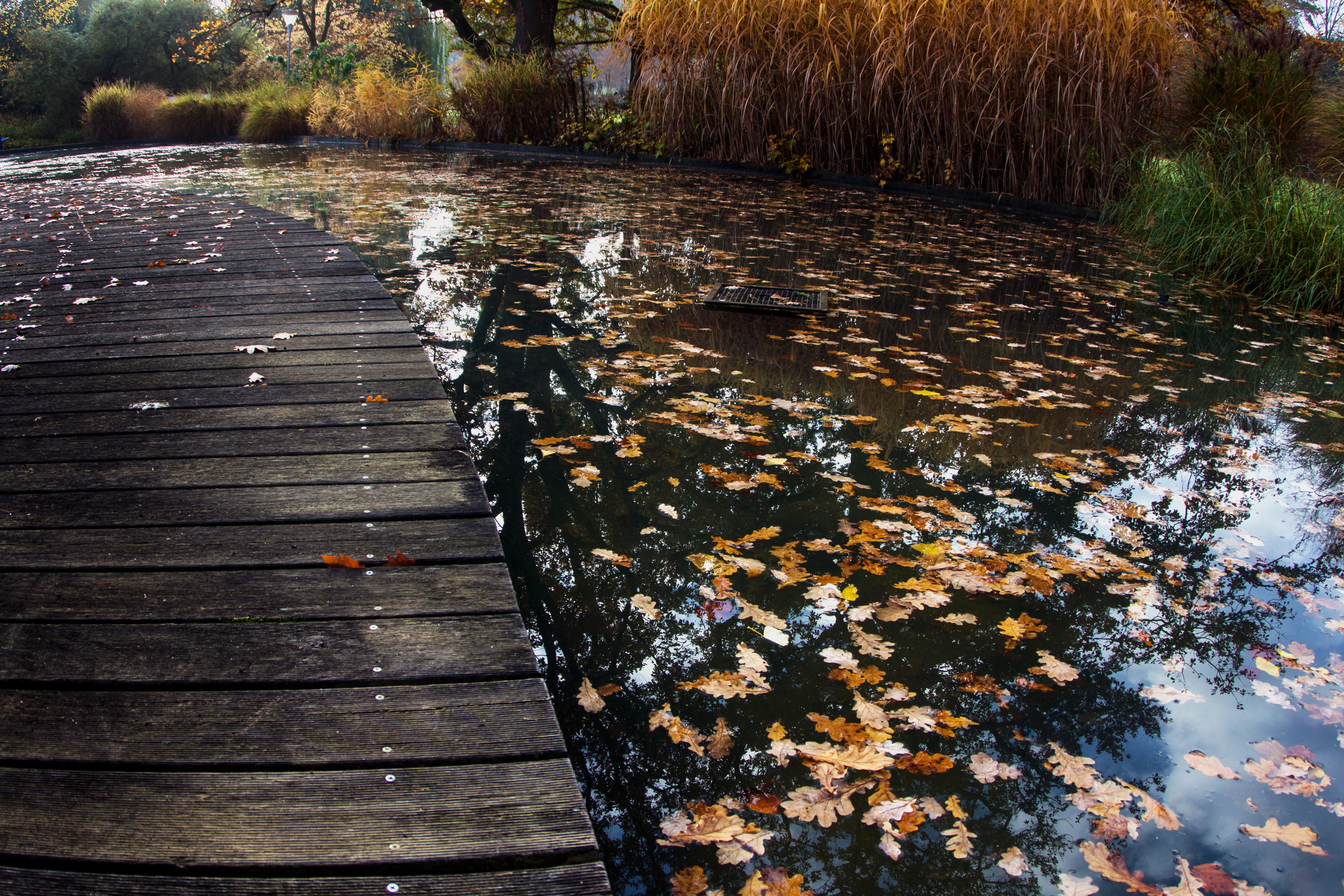 тех пор картинка пруд и листья велосипеды дорабатывались