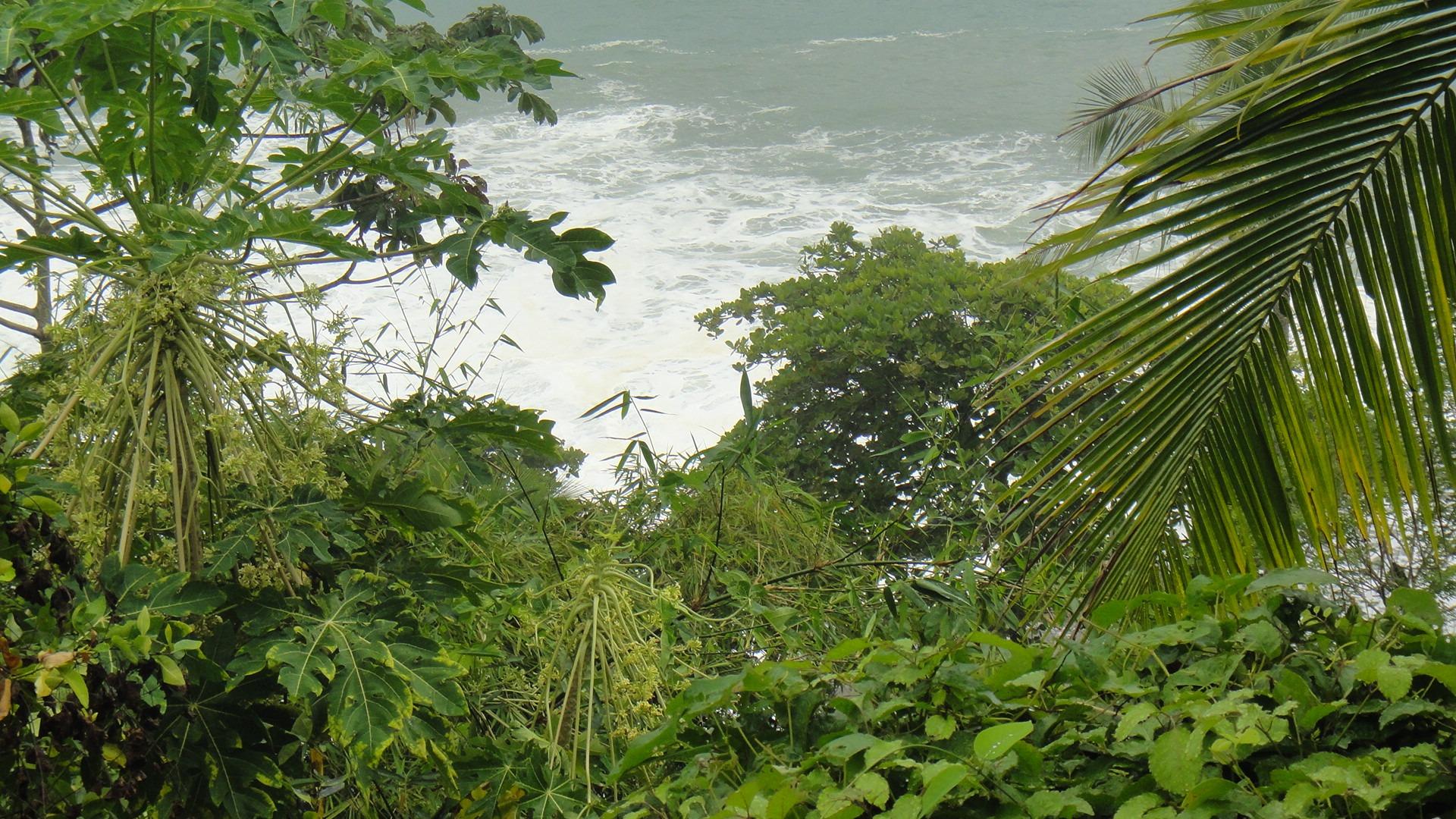 hình ảnh : cây, Nước, thiên nhiên, chi nhánh, Lá, hoa, màu xanh lá, rừng nhiệt đới, Chảy, nhiệt đới, Thực vật học, Hệ thực vật, Cây xanh, dừa, Có lá, Cây ...