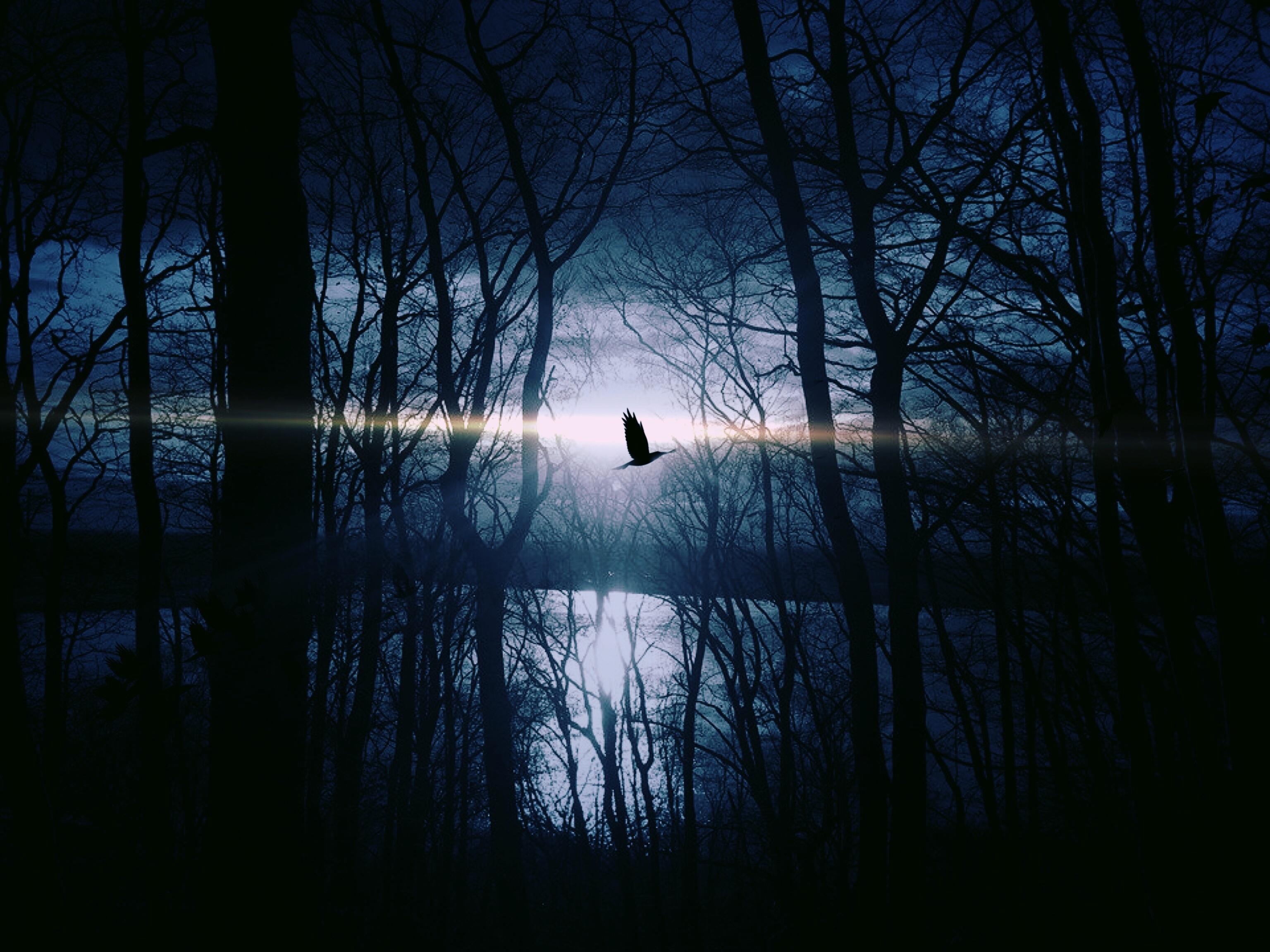 картинки птицы ночью вообще, мясо столе
