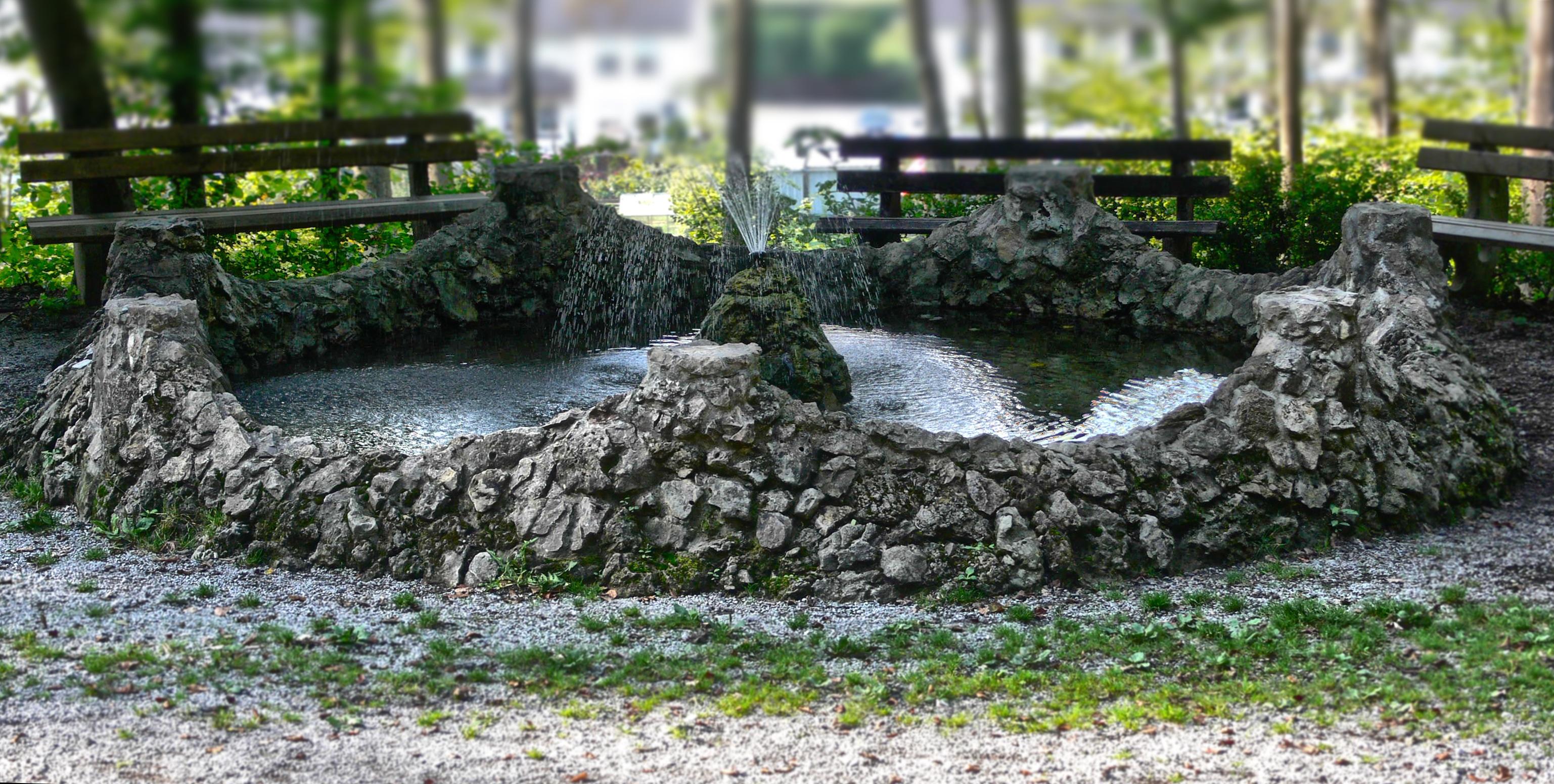 Fotos gratis rbol agua naturaleza bosque csped antiguo