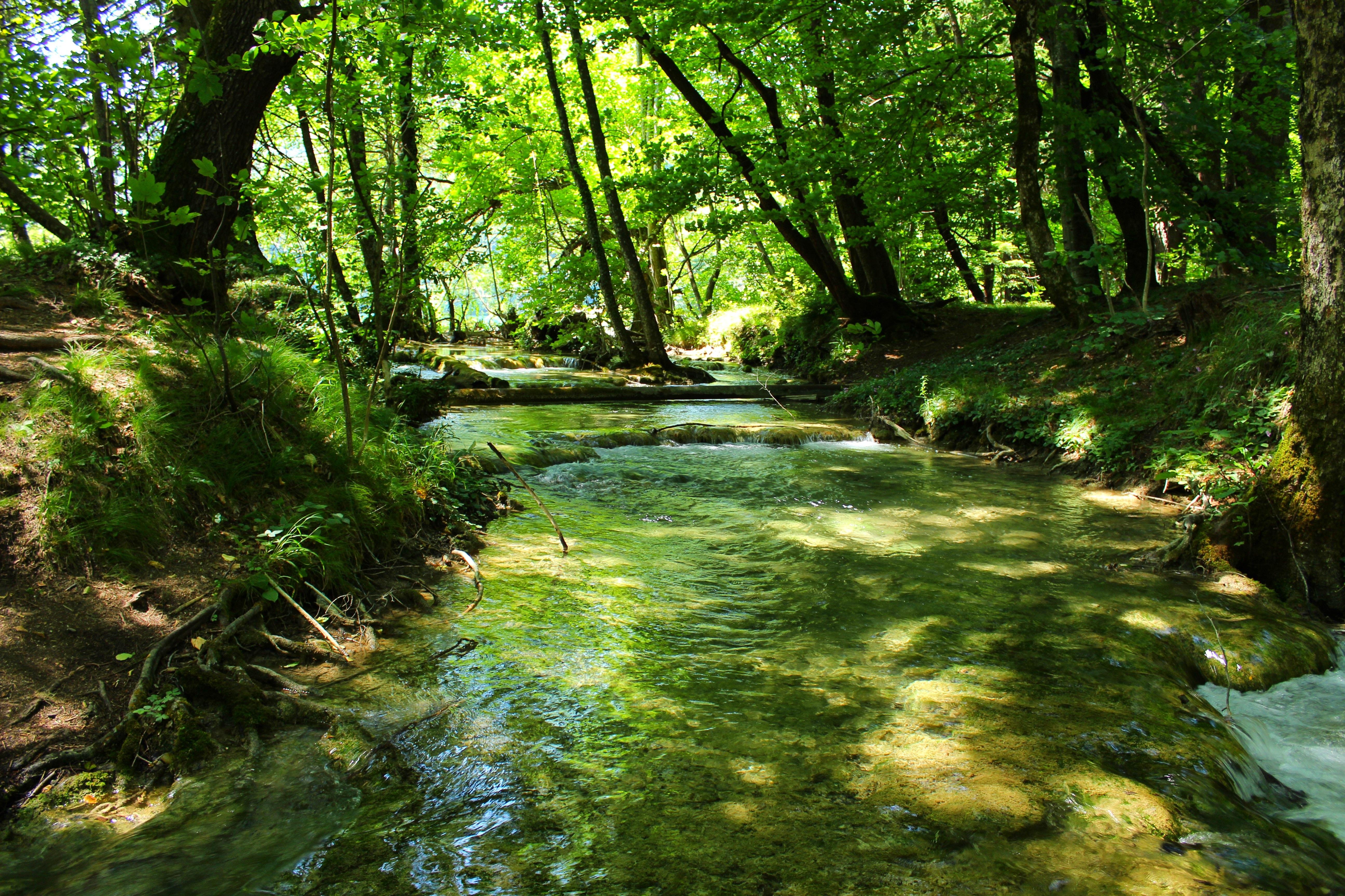 the paradise stream deutsch