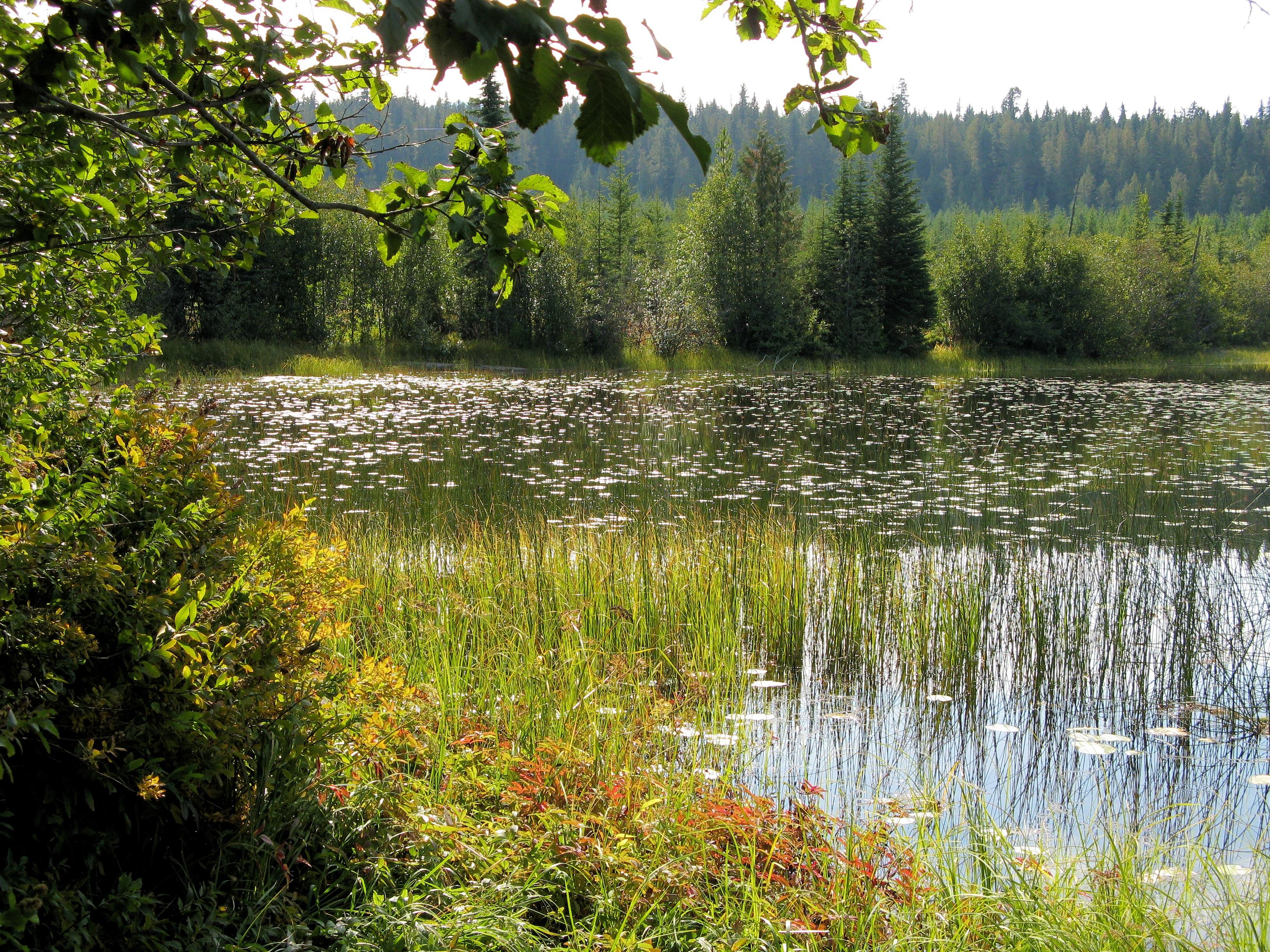 Kostenlose Foto Baum Wasser Natur Wald Draussen Sumpf
