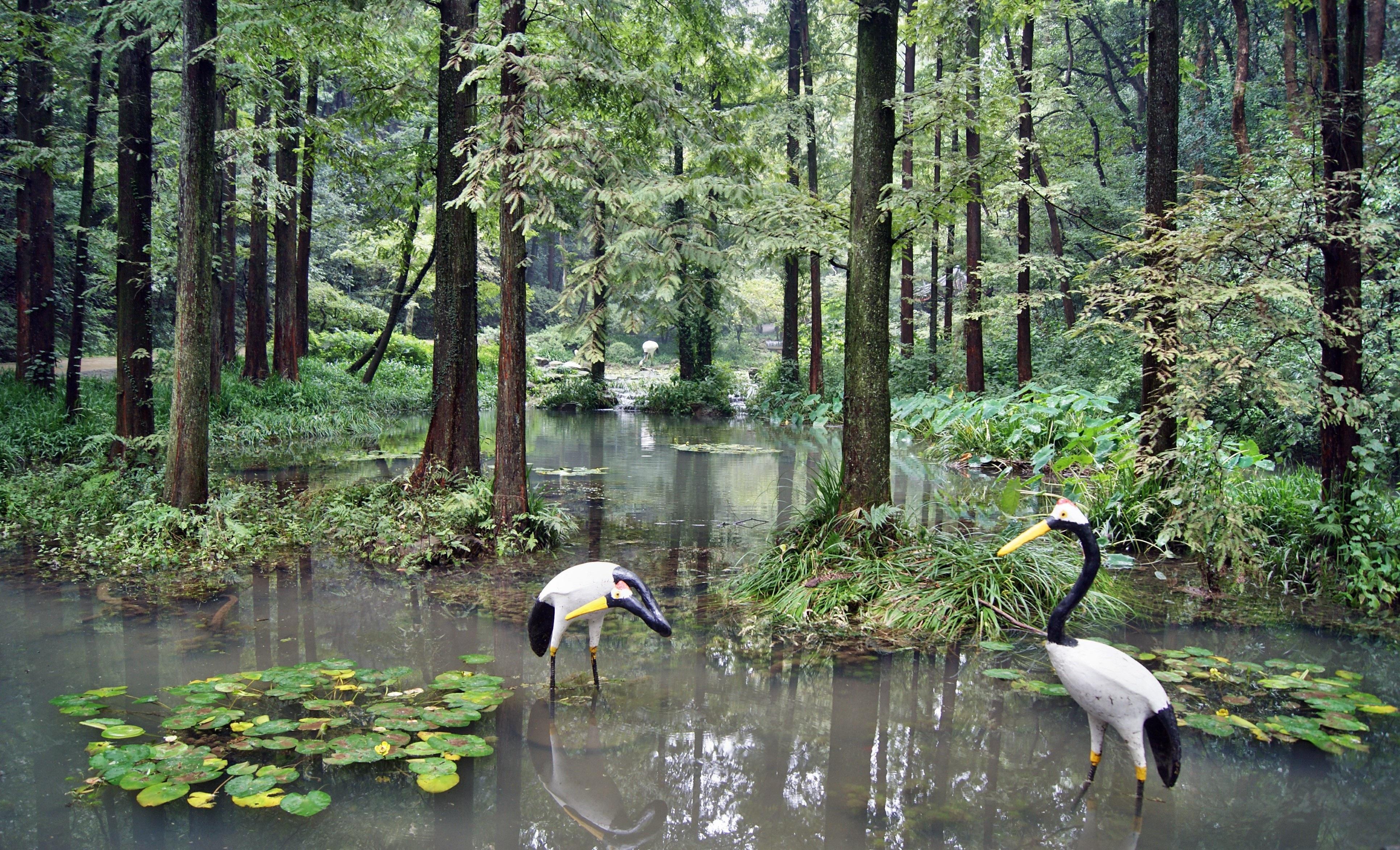 swamp wetland wwwpixsharkcom images galleries with a