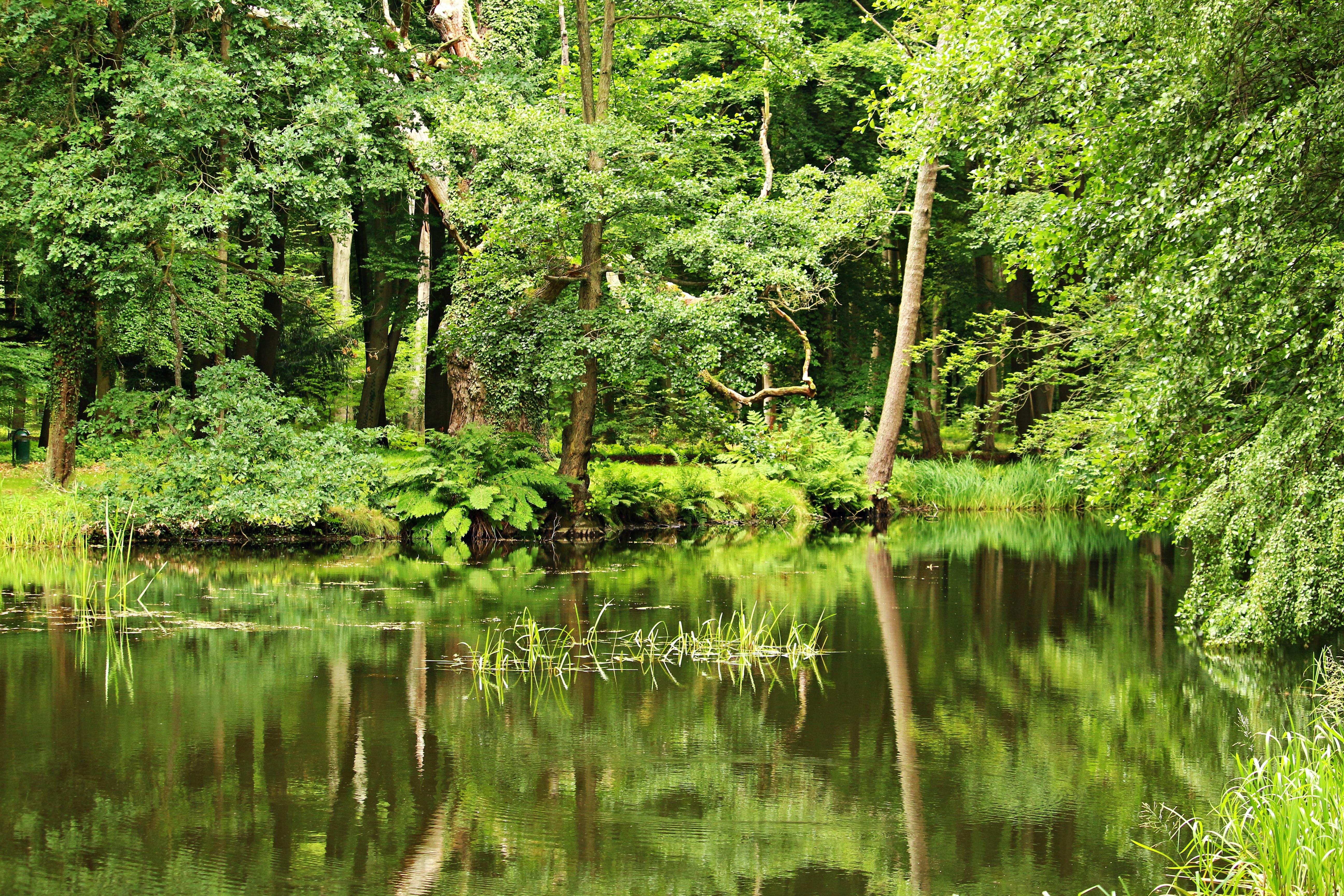 Free Images Tree Water Swamp Wilderness Meadow Leaf Flower Lake River Stream Green Reflection Jungle Botany Garden Trees Bank Vegetation