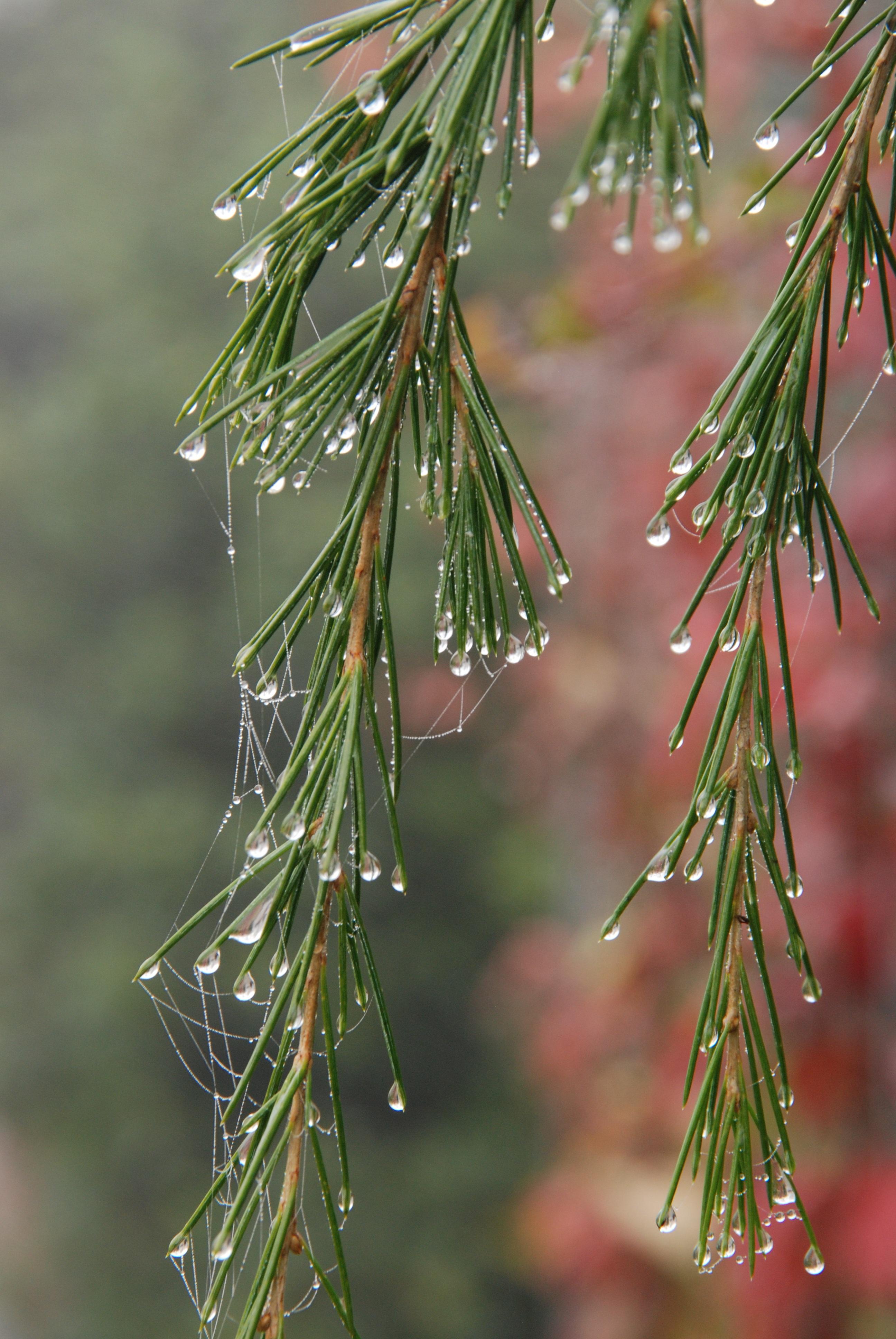 kostenlose foto : baum, wasser, natur, gras, ast, fallen, tau, nebel