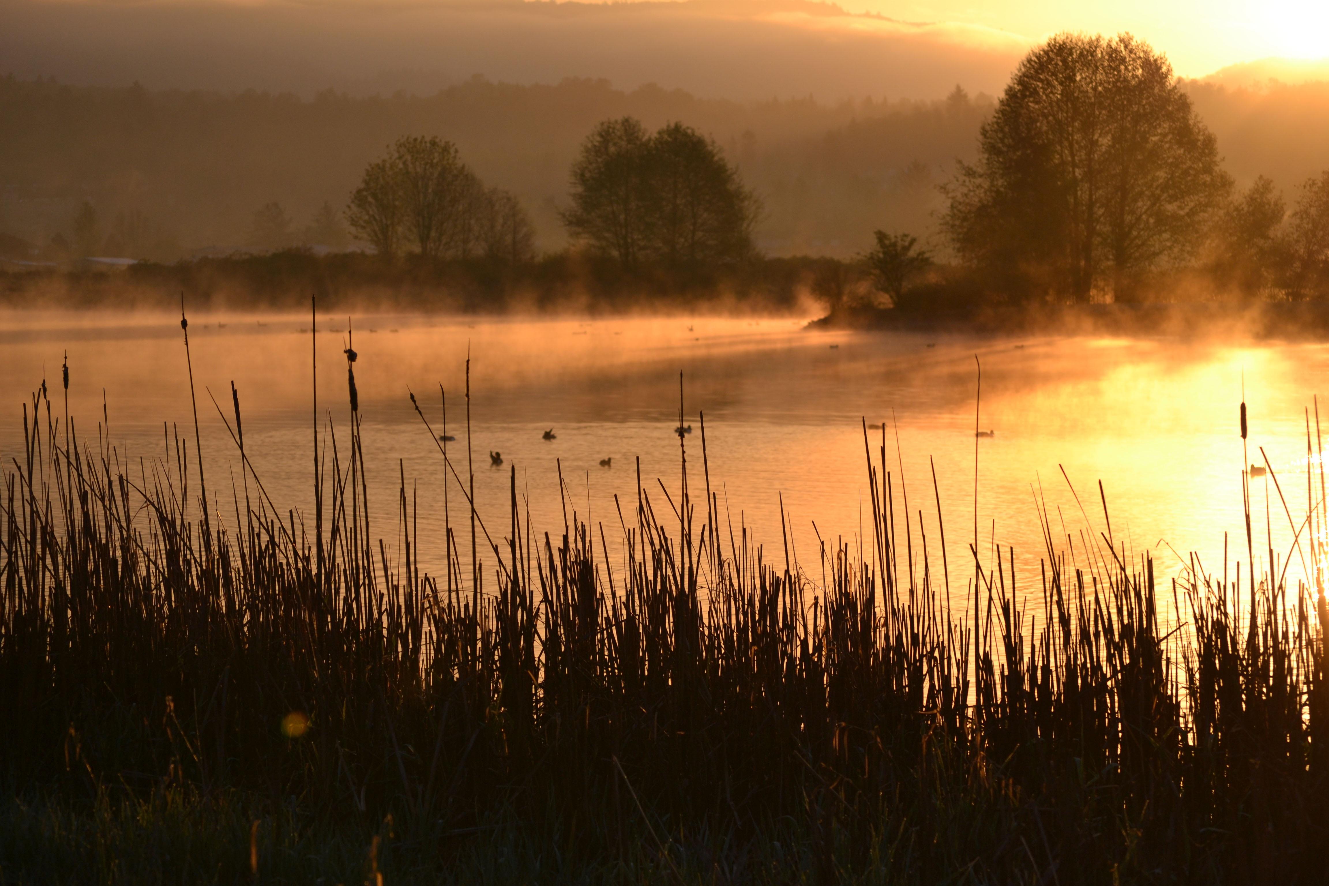 무료 이미지 : 나무, 물, 자연, 잔디, 습지, 안개, 해돋이, 일몰, 햇빛, 증기, 아침, 호수 ...