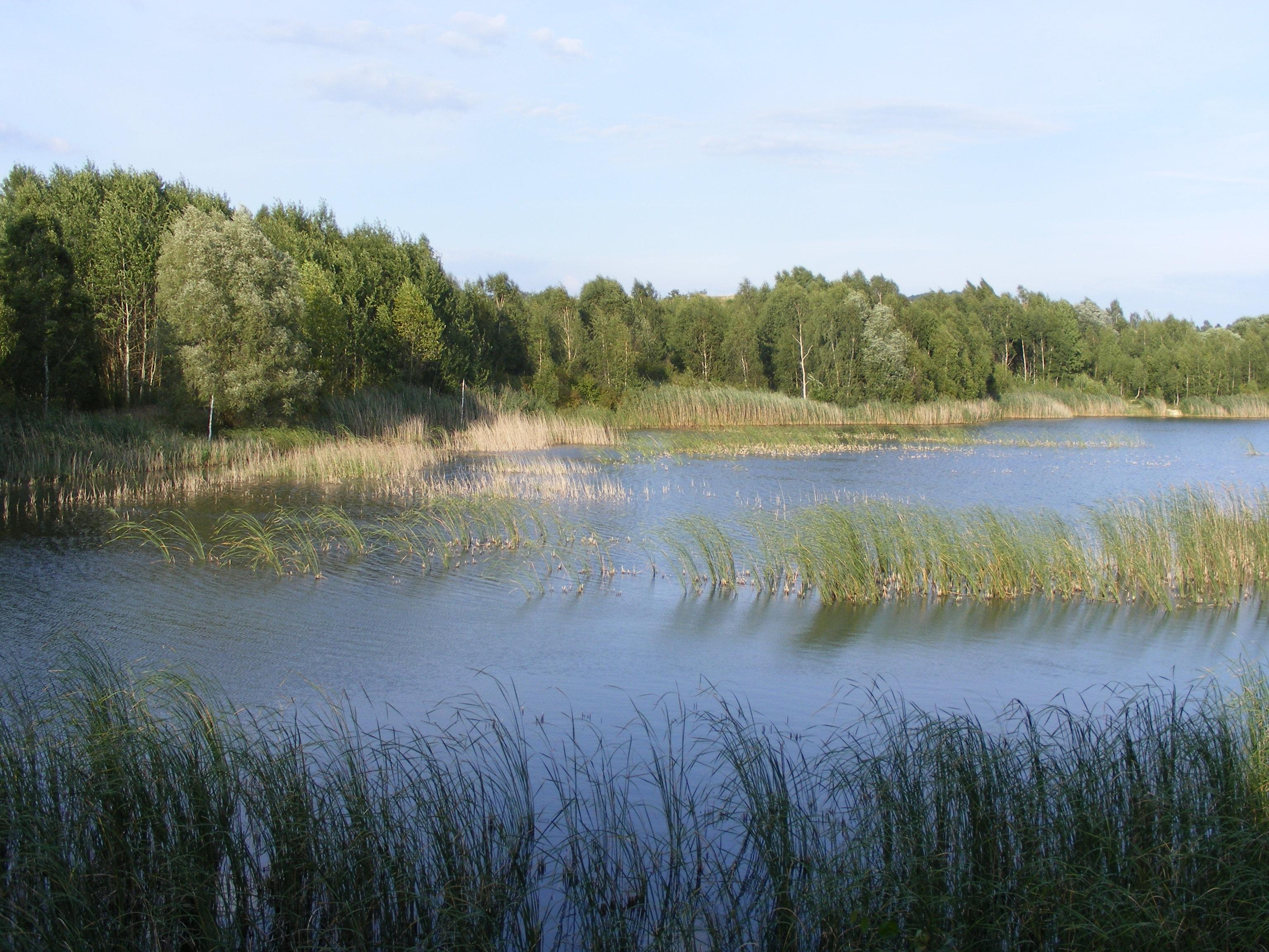 Kostenlose foto baum wasser natur gras sumpf wiese for Fischteich wasser reinigen