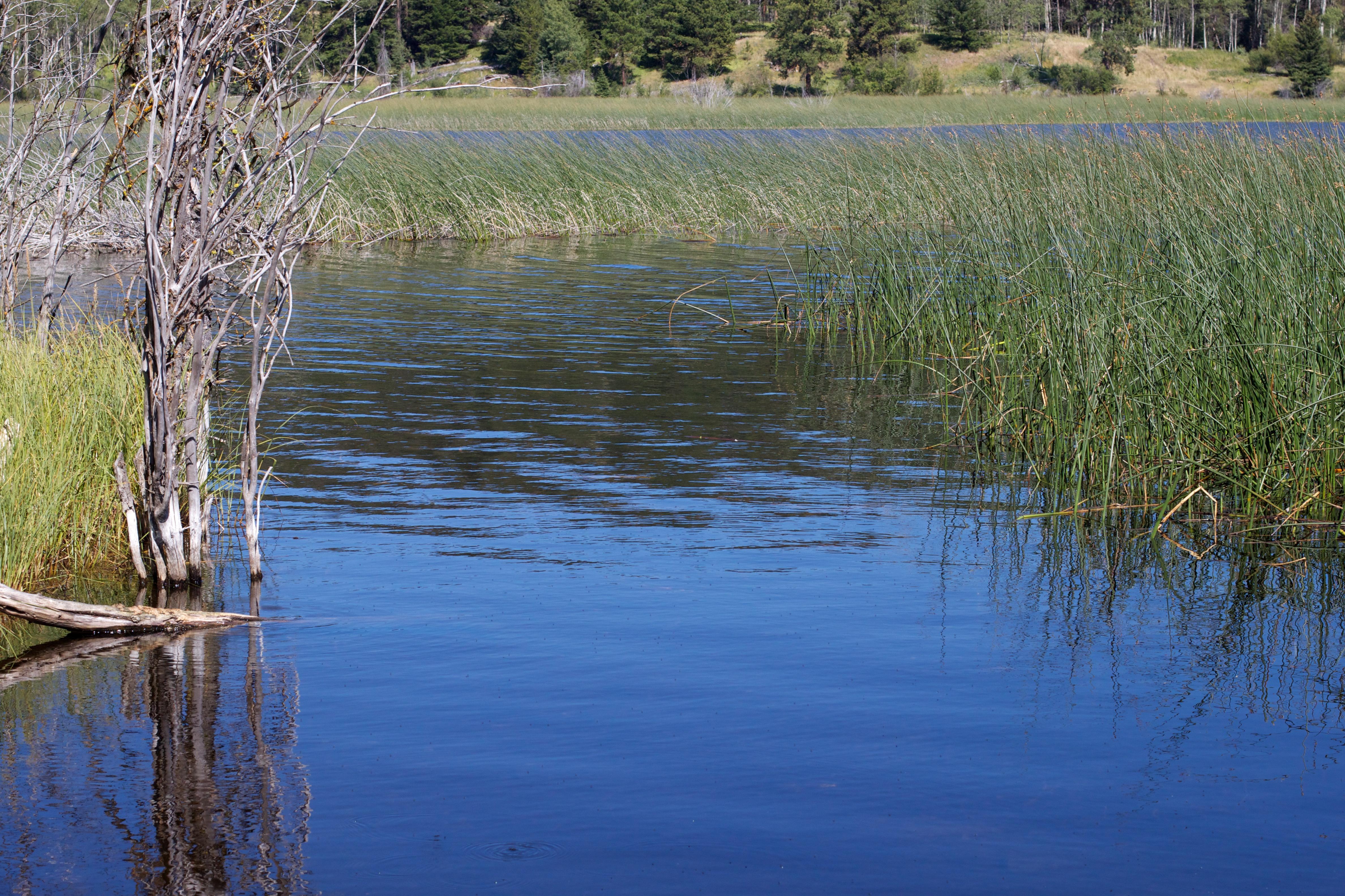 картинки рек озер болот украины множество изображений