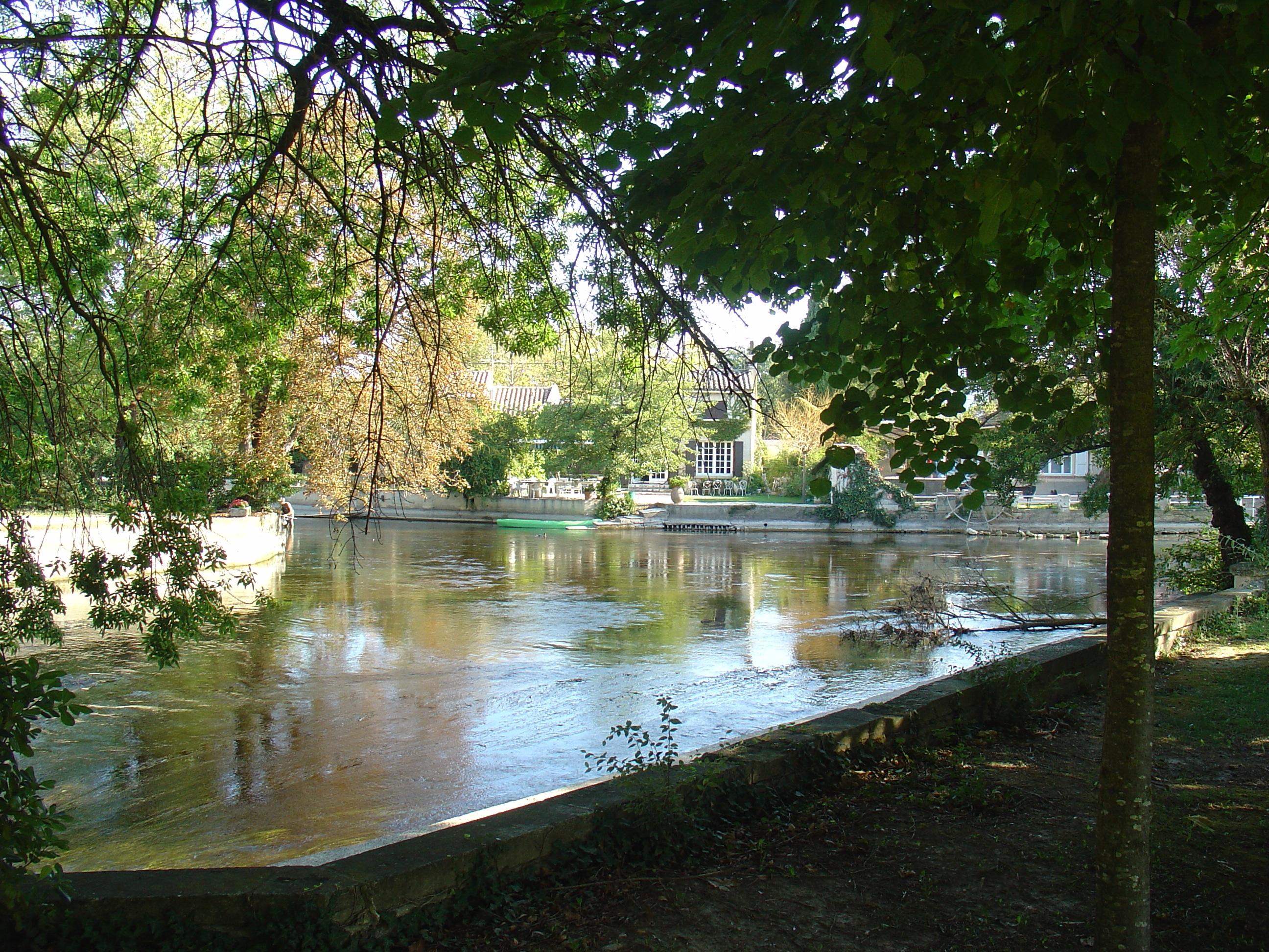 free images tree nature lake parking river summer swimming