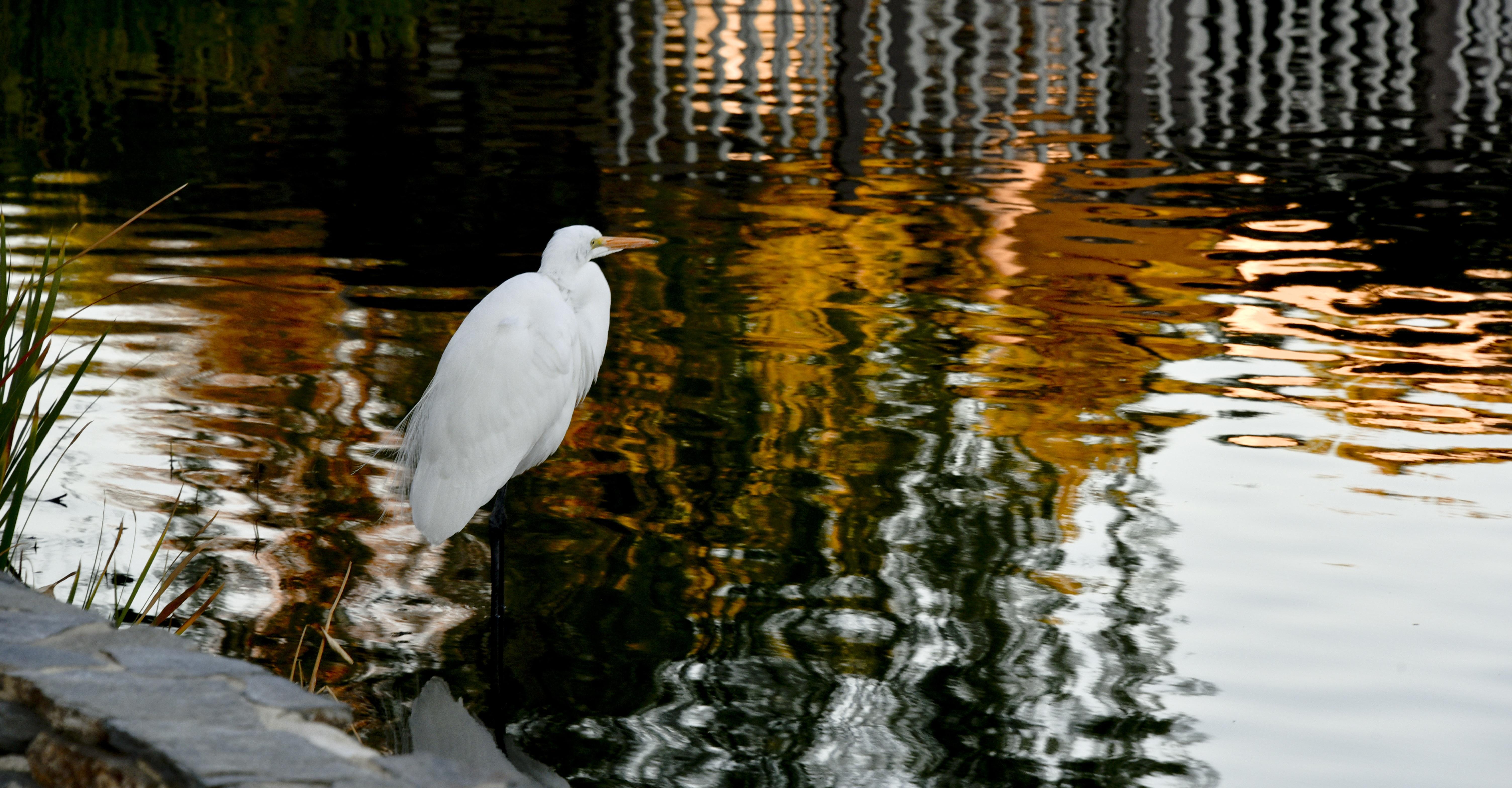 τεράστιο λευκό πουλί εικόνες