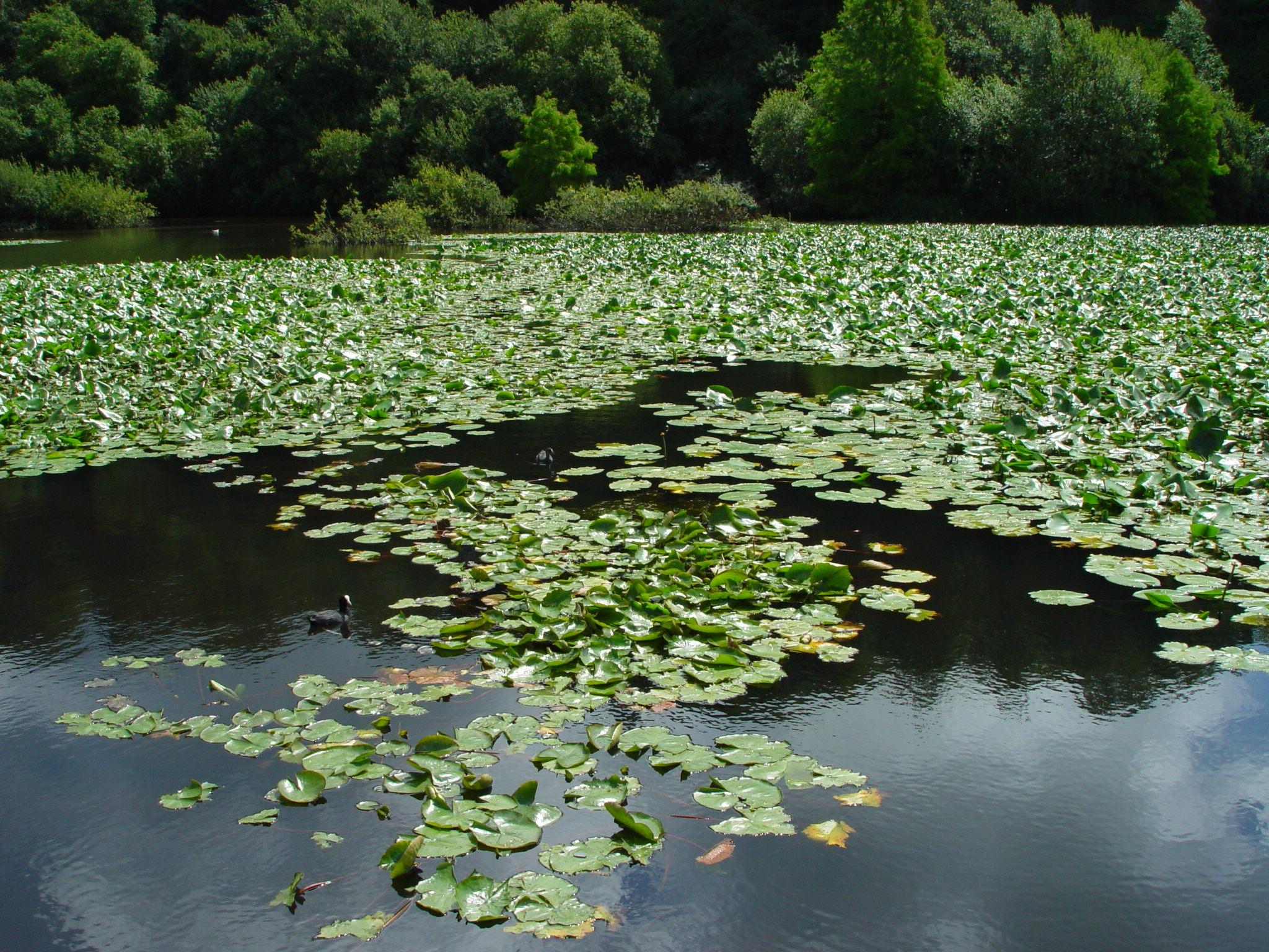 Gratuites arbre eau la nature plante feuille fleur