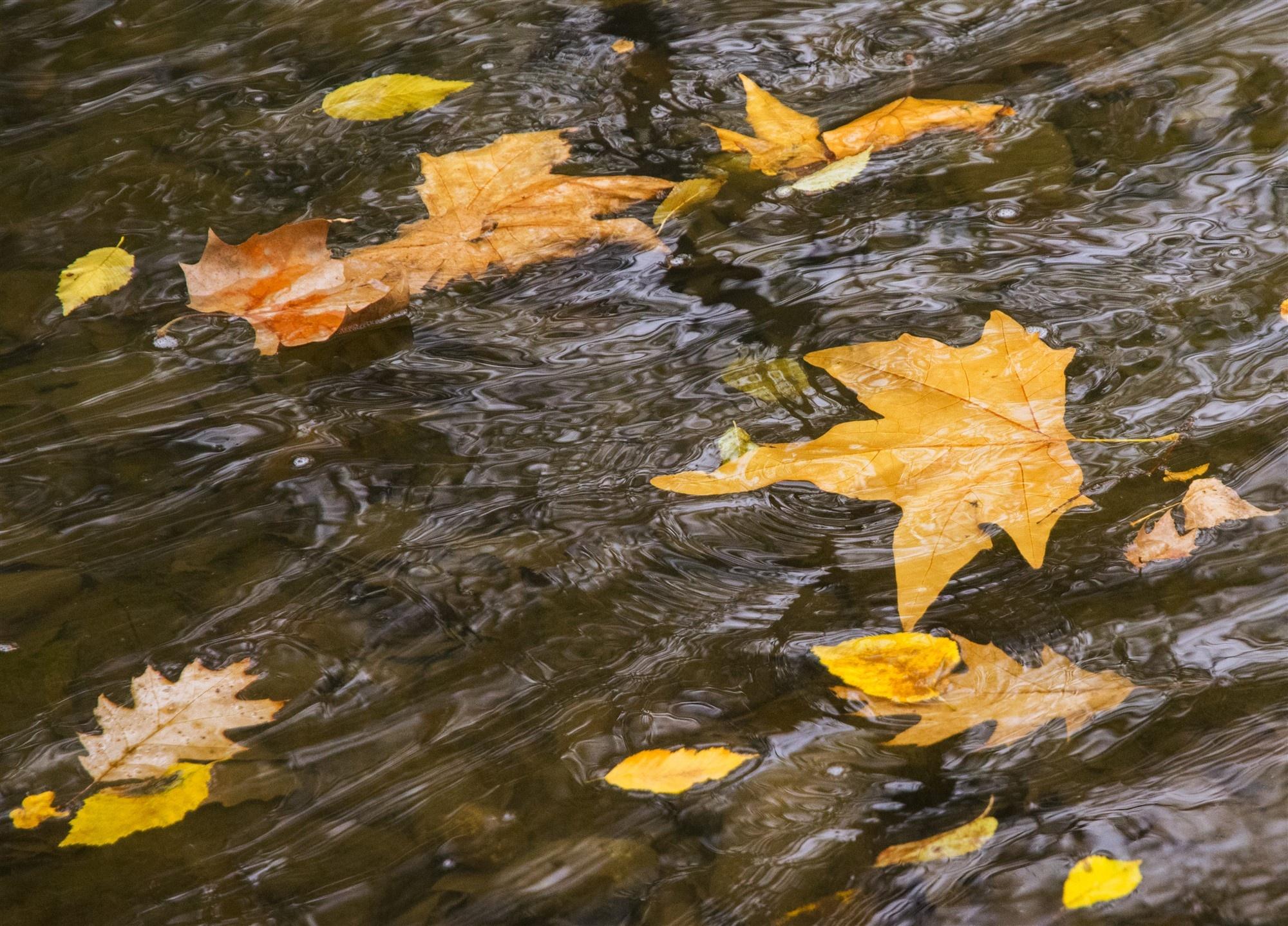 Картинки осенние листья на воде