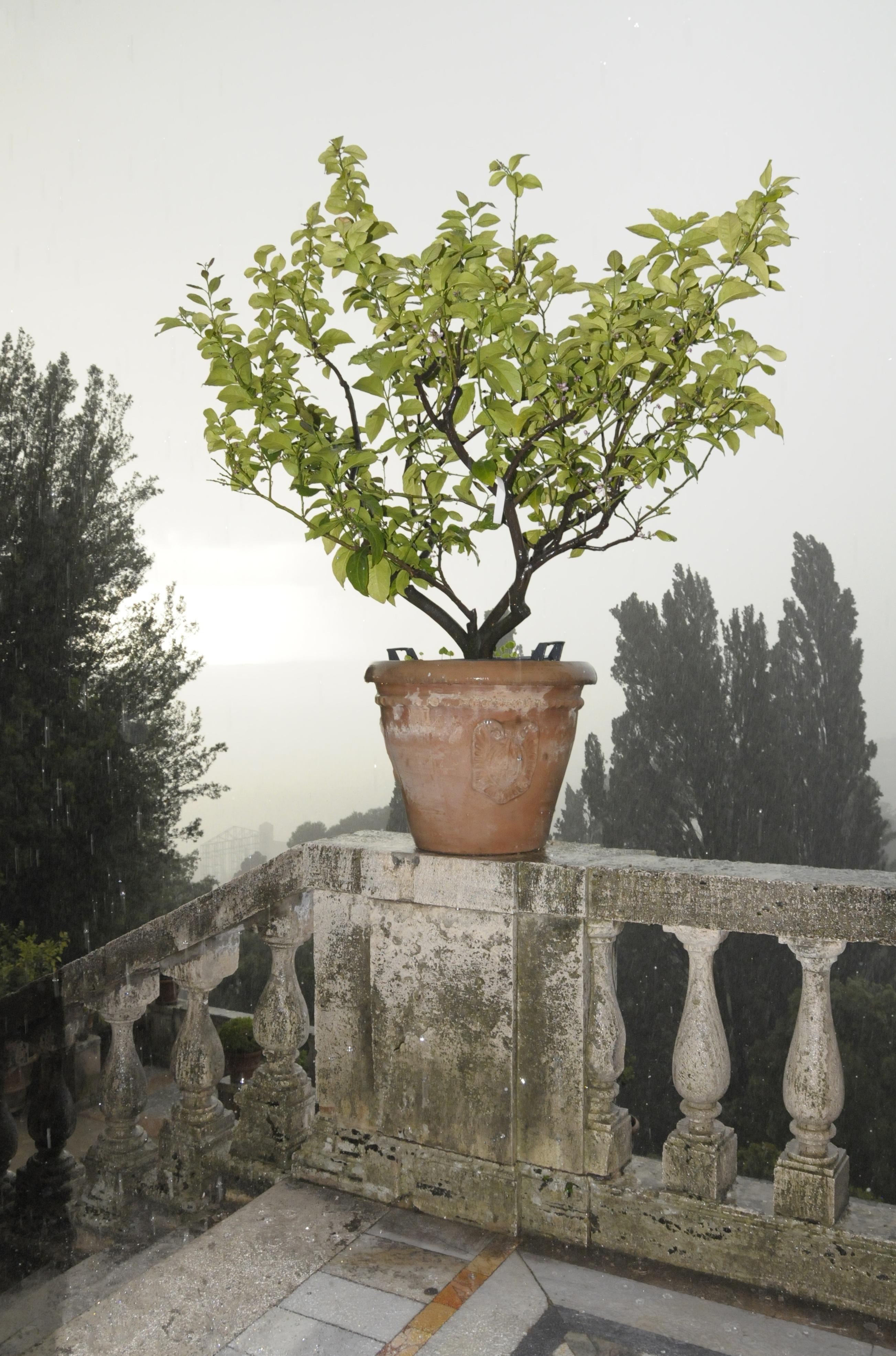 images gratuites arbre eau la nature fleur goutte de pluie humide balcon m t o. Black Bedroom Furniture Sets. Home Design Ideas