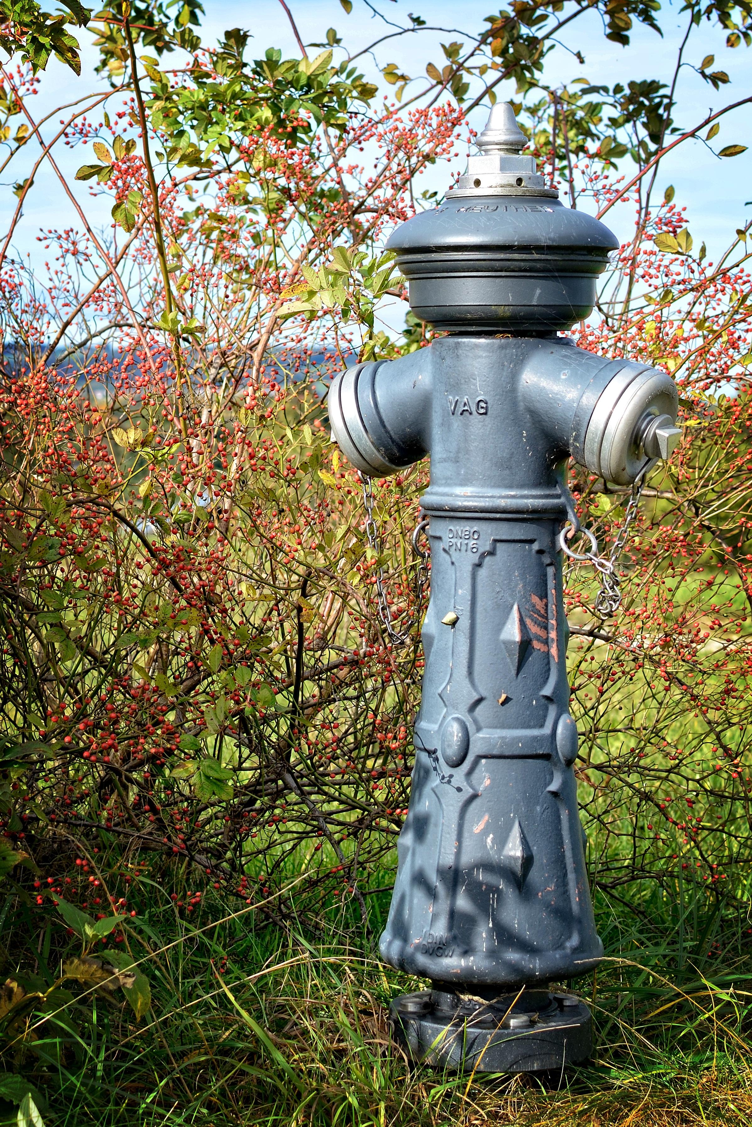 Fotos gratis rbol naturaleza planta estatua verde for Iluminacion arboles jardin