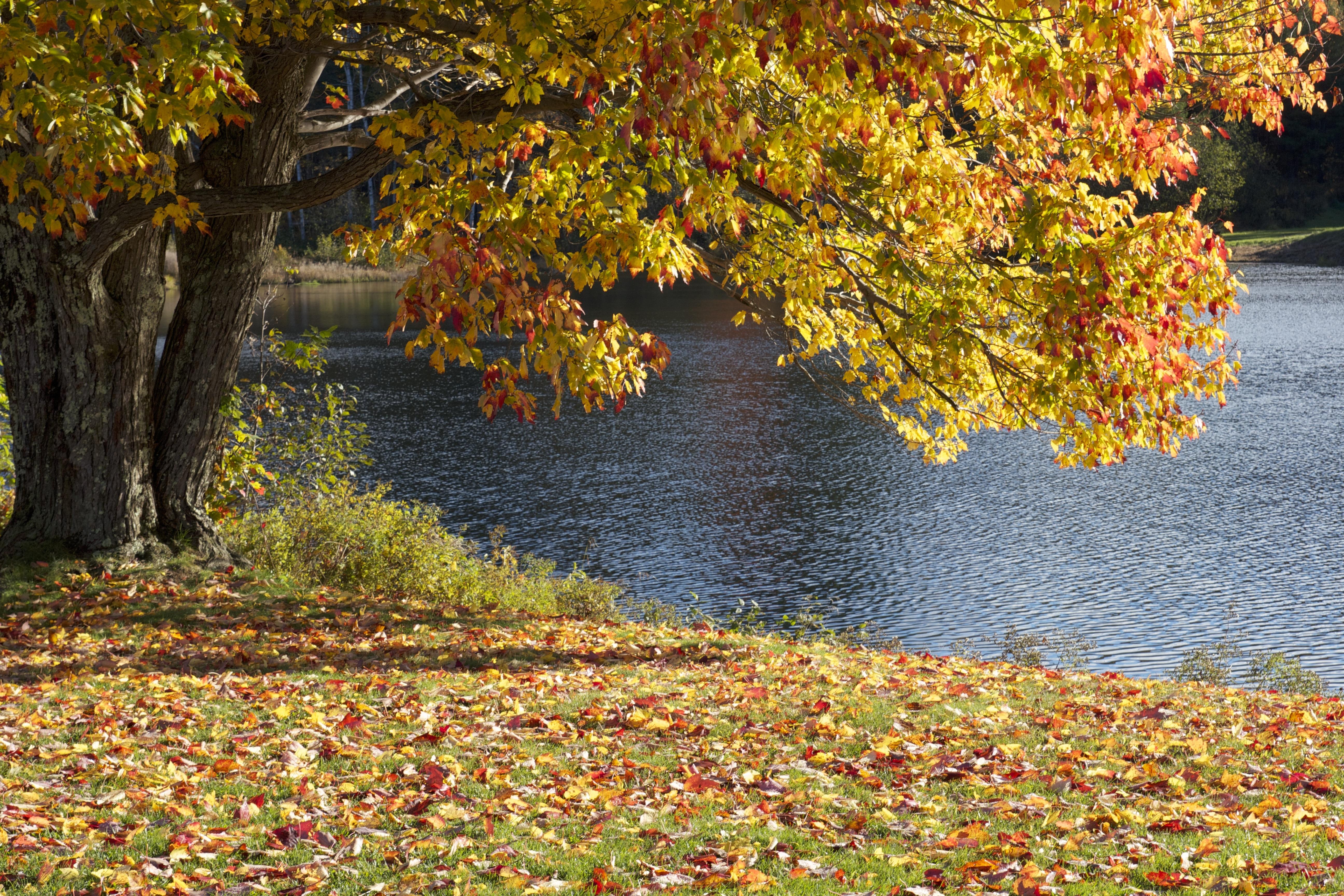 меня показать картинки осень золотая гармоничного оформления помещения