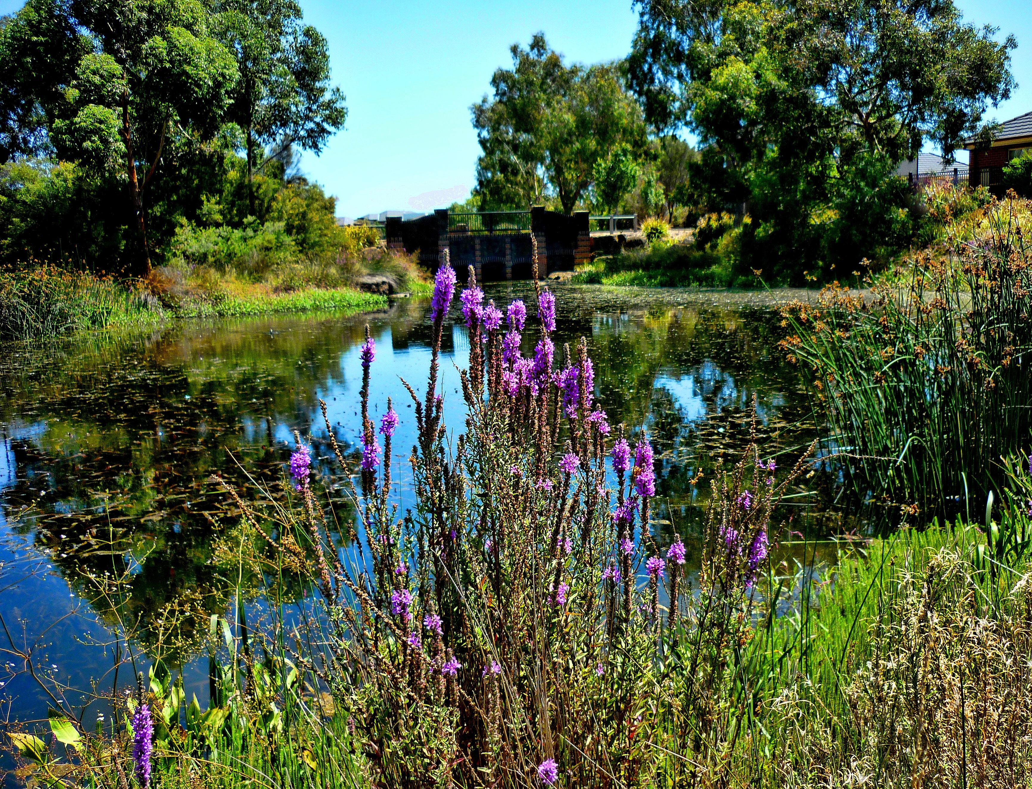 Картинки река цветы