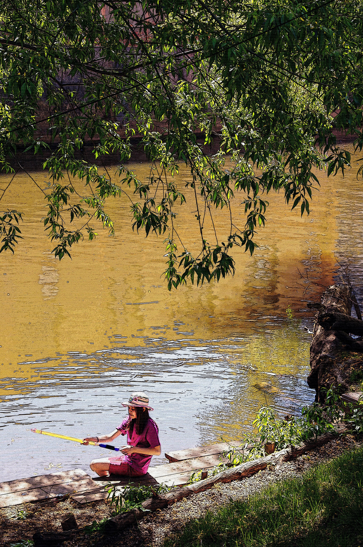 Fluss In Leipzig kostenlose foto baum wasser natur wildnis blatt see fluss