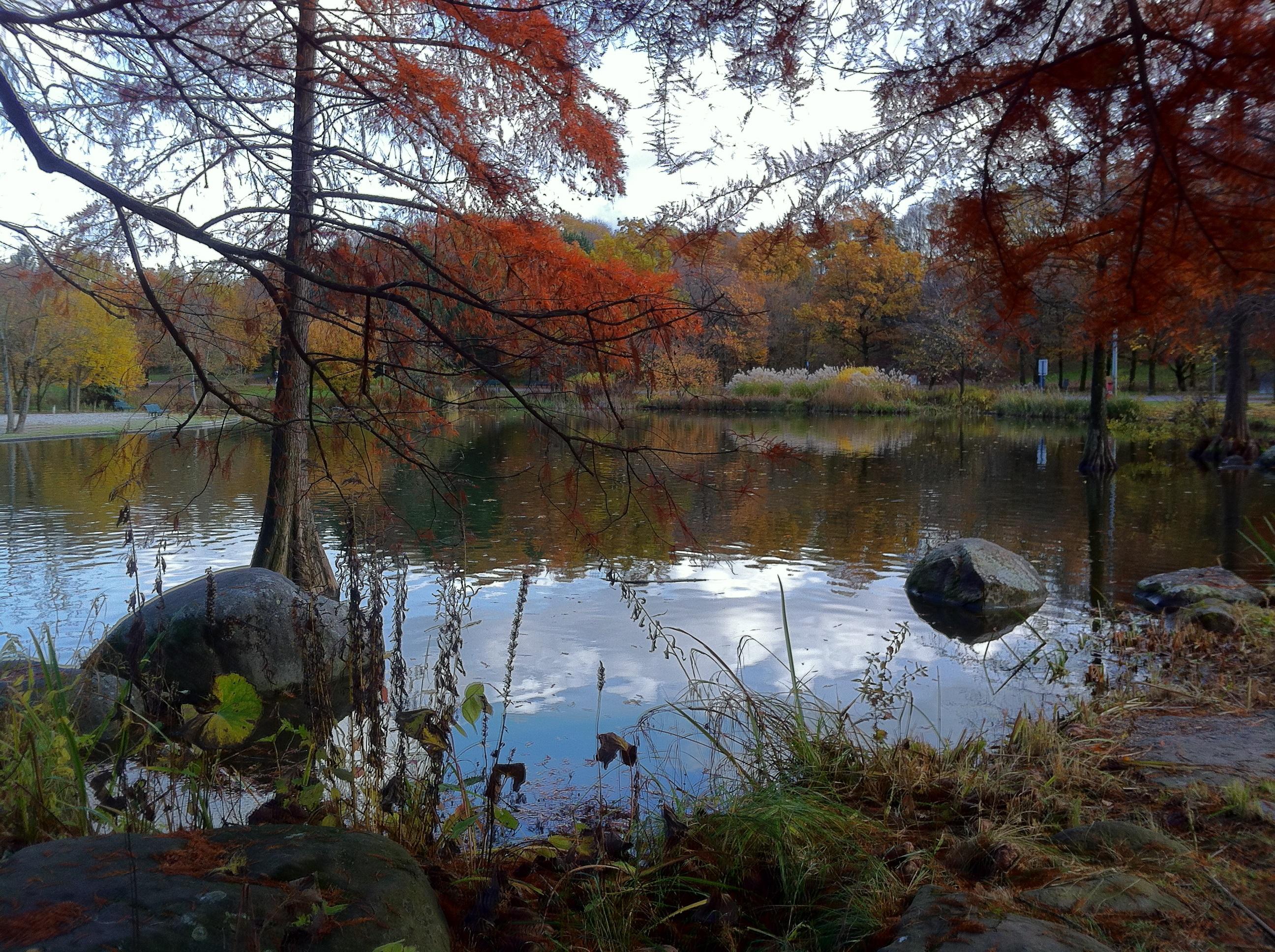Kostenlose foto : Baum, Wasser, Natur, Wildnis, Pflanze, Blatt, See ...