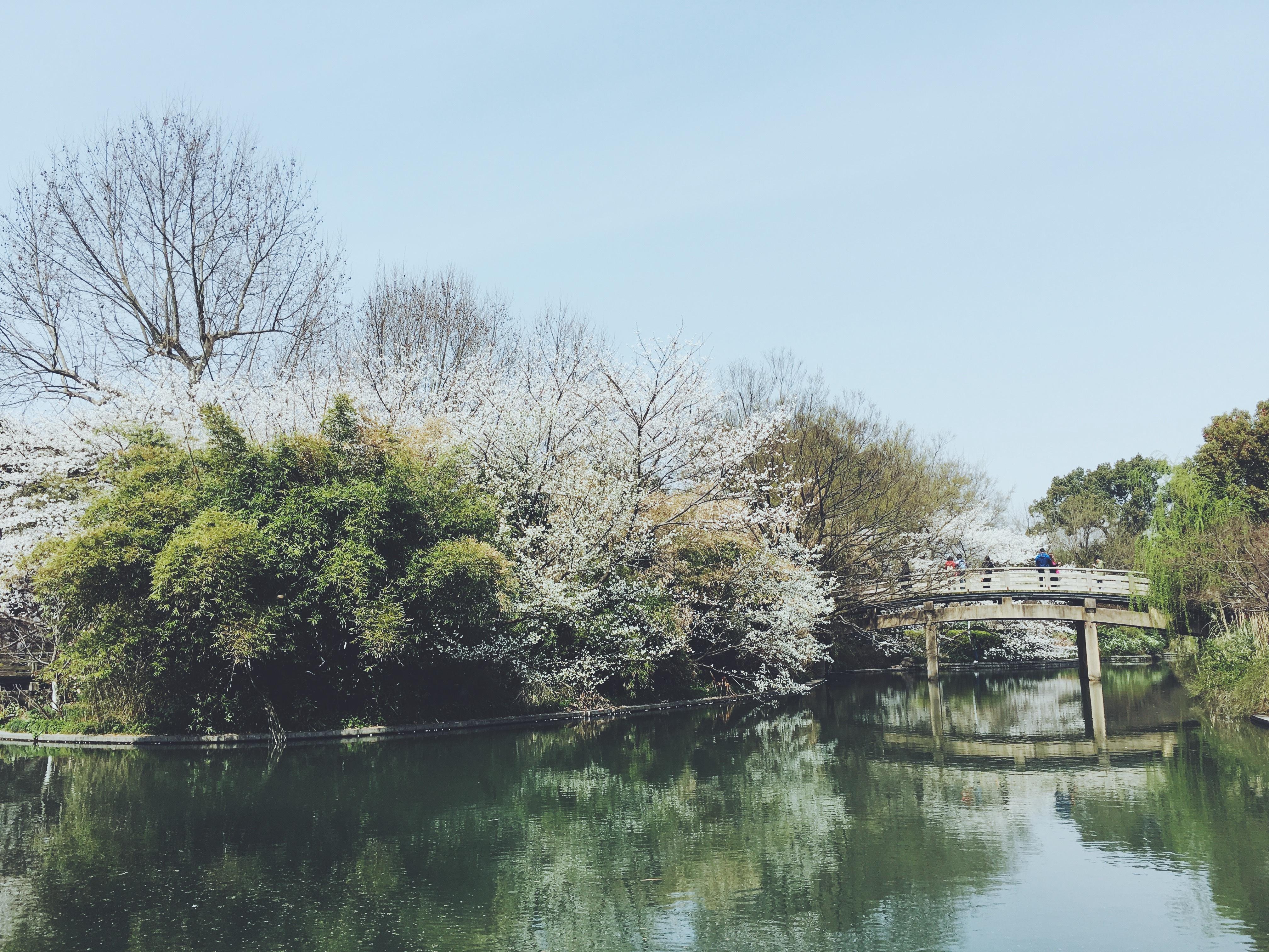 Images Gratuites Arbre Eau Plante Fleur Lac Riviere Canal
