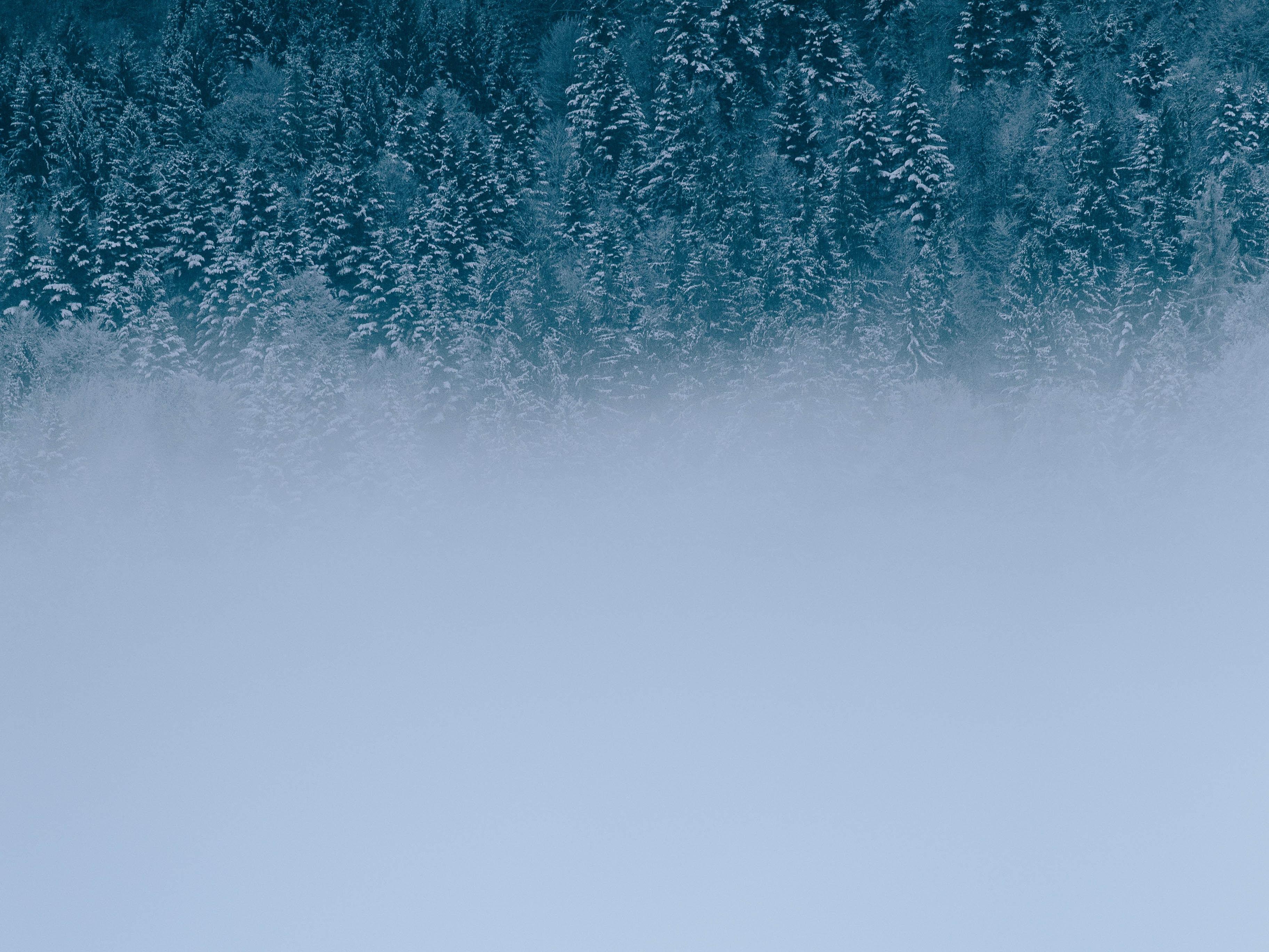 Immagini Belle Albero Acqua Inverno Cielo Onda Giorno Calma