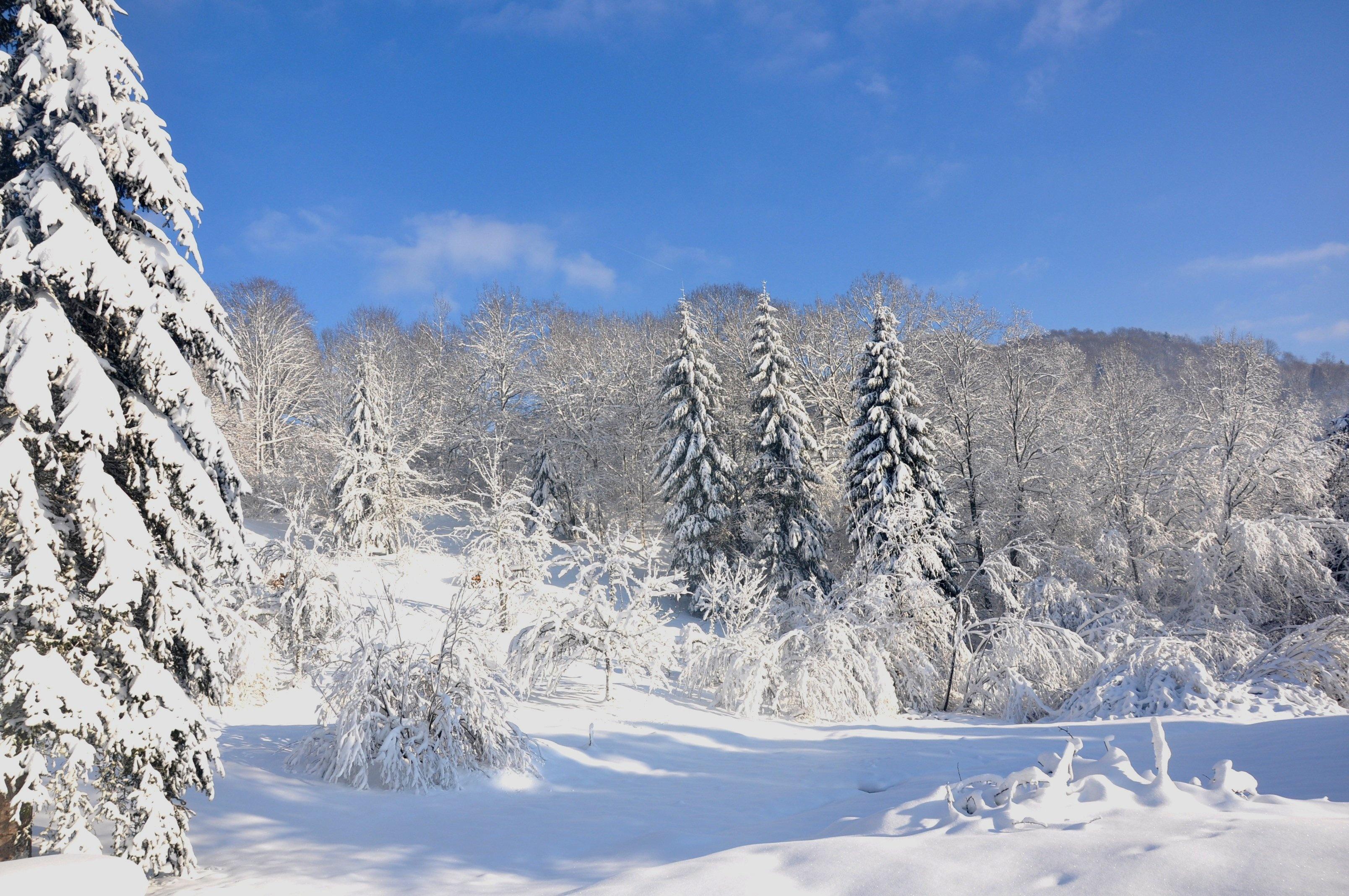 Images gratuites arbre r gion sauvage montagne neige - Photos de neige gratuites ...