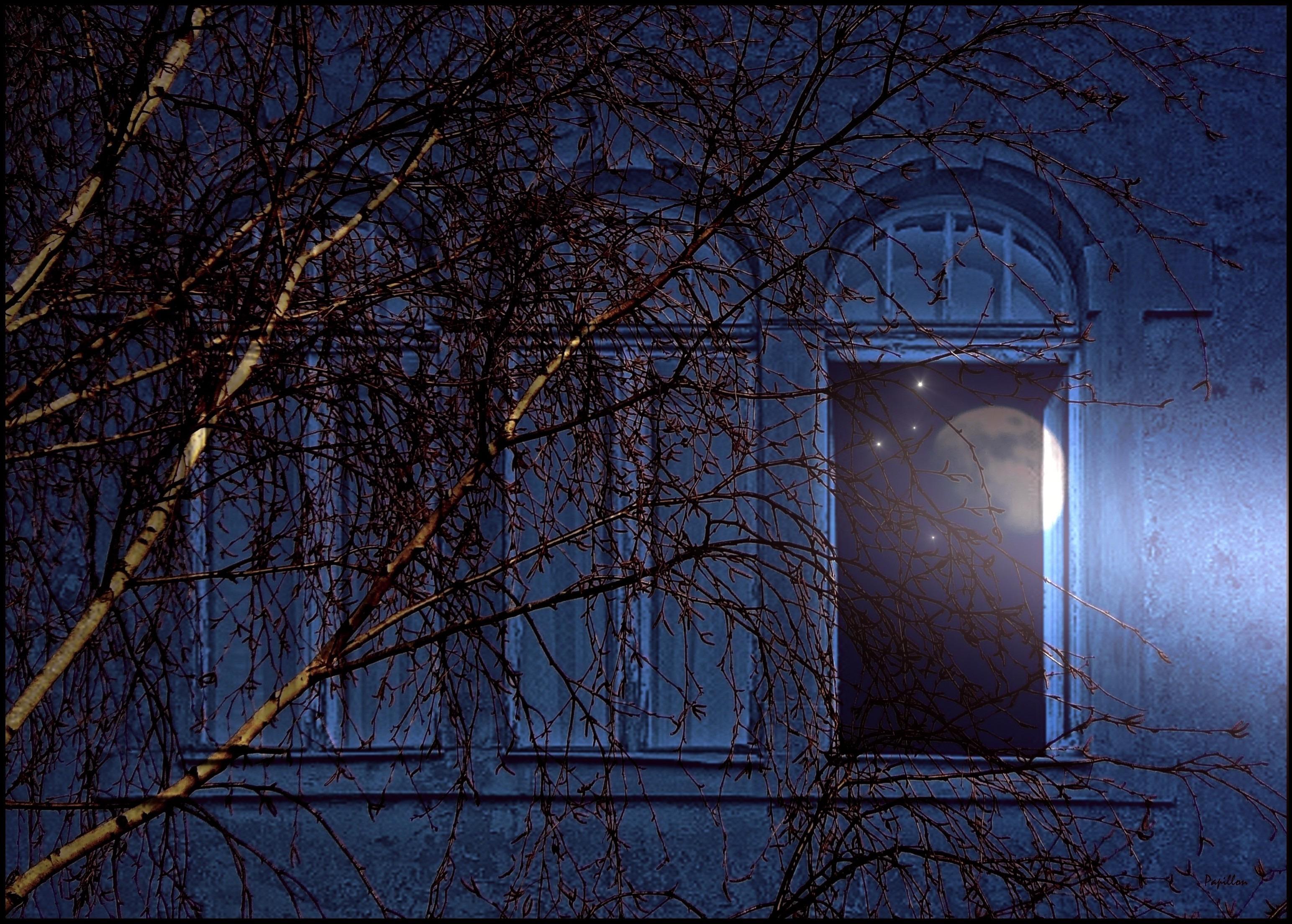 Immagini belle : albero inverno leggero architettura notte luce