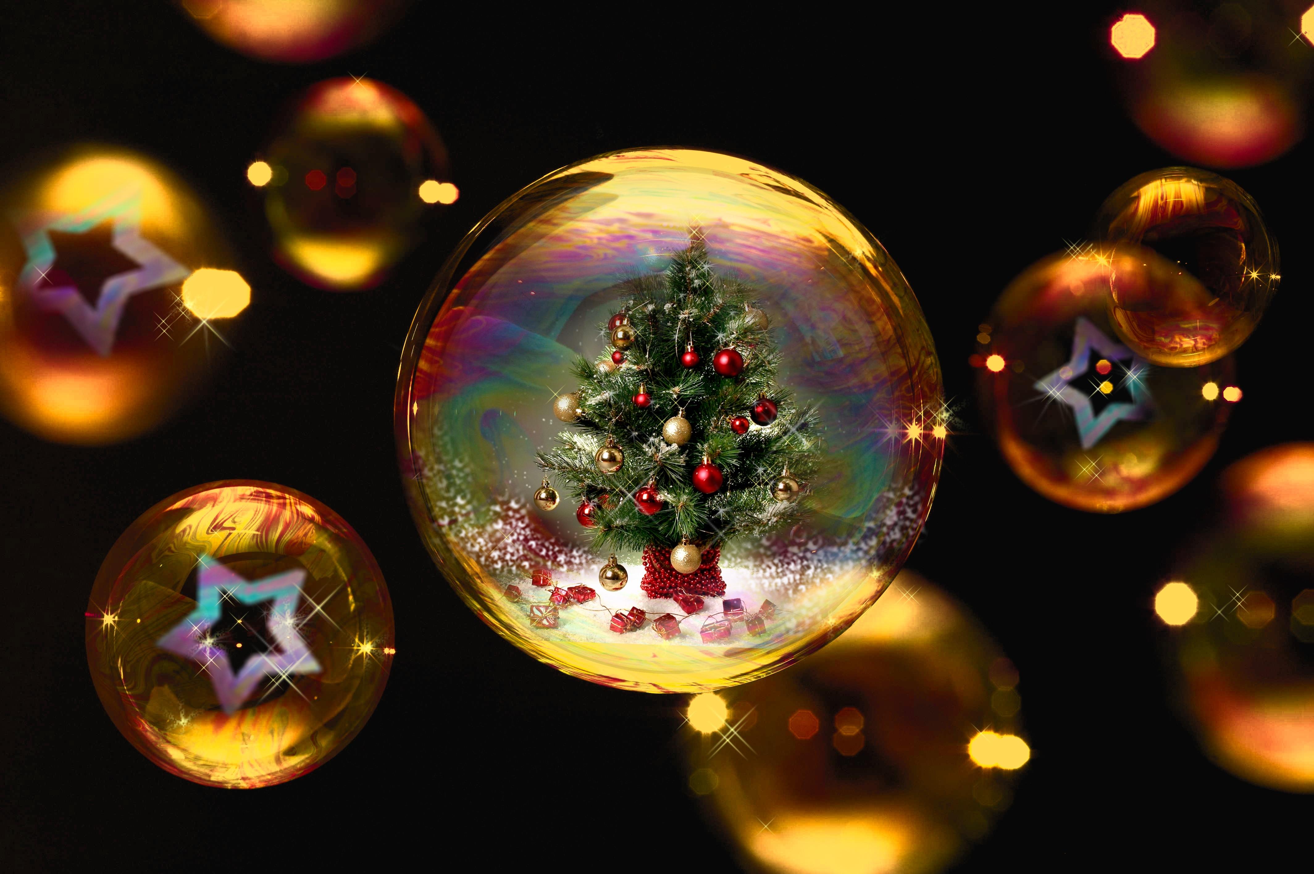 Fotos gratis : invierno, ligero, estrella, color, árbol de Navidad ...