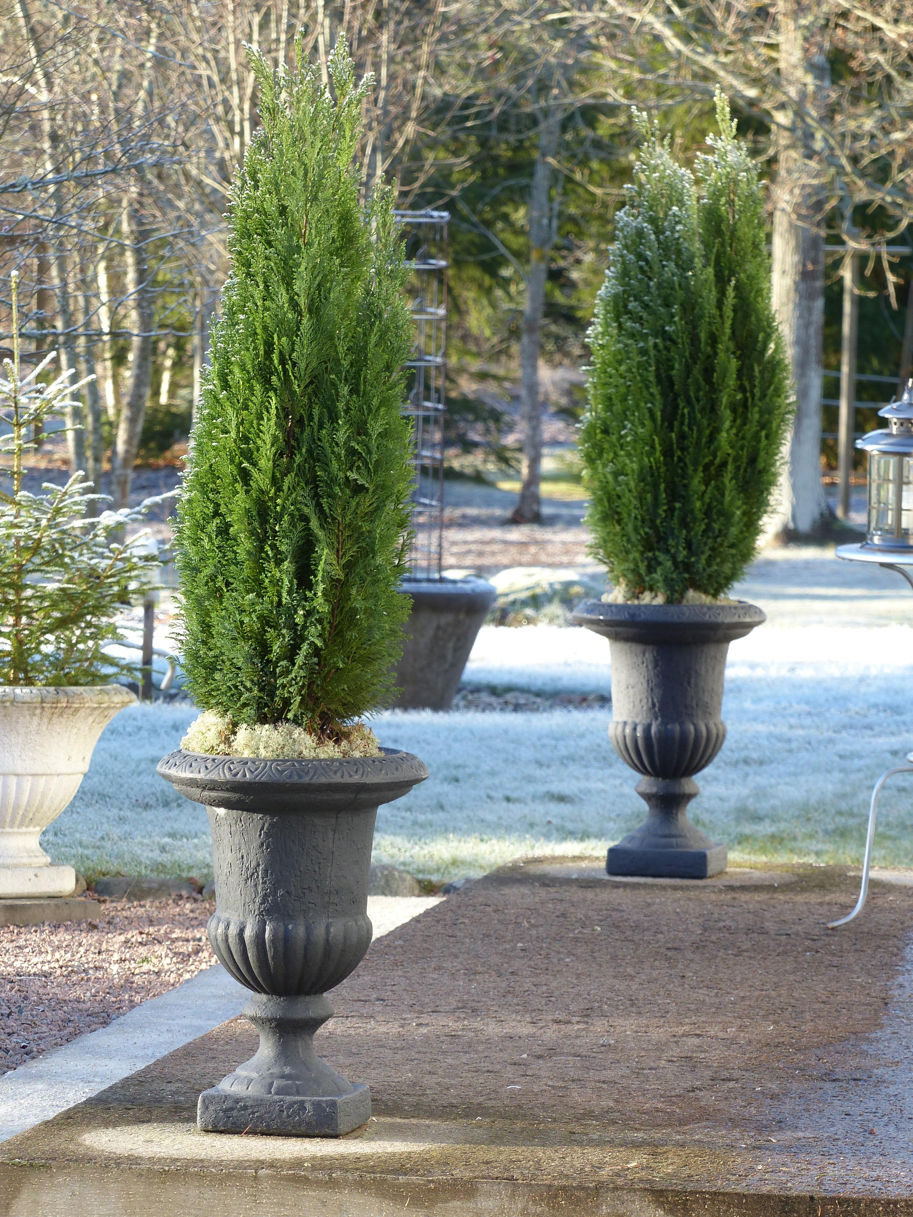 Arbre En Pot Hiver images gratuites : arbre, hiver, plante, gel, escalier, vert