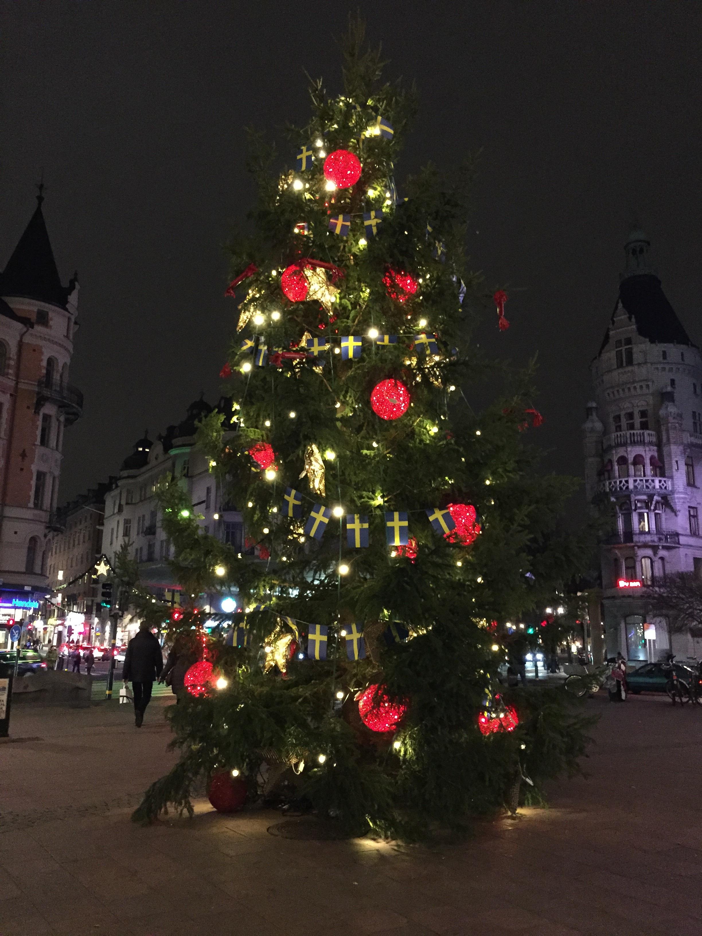 Plant A Christmas Tree