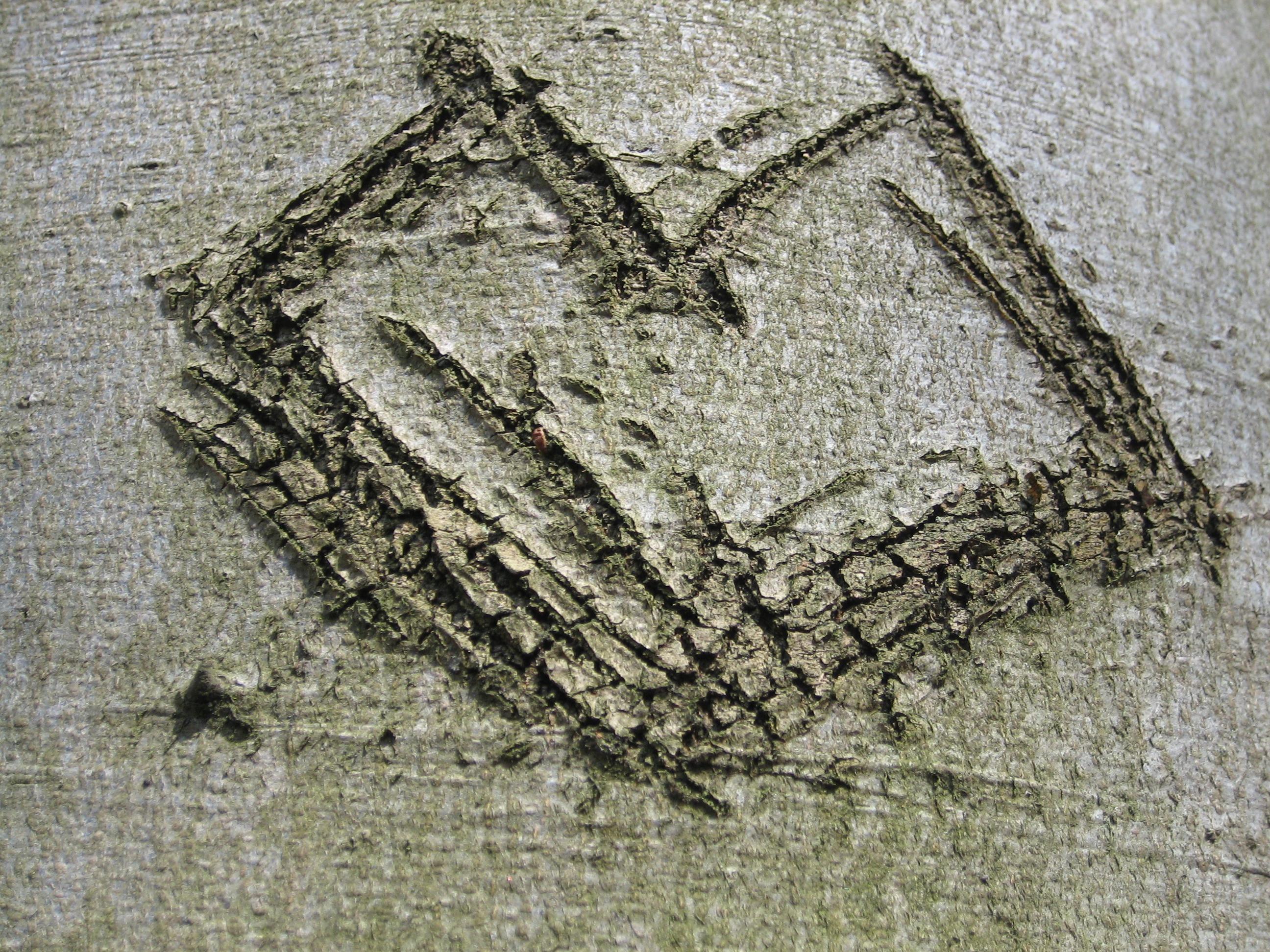 images gratuites arbre bois corce amour c ur art esquisser dessin grav histoire. Black Bedroom Furniture Sets. Home Design Ideas