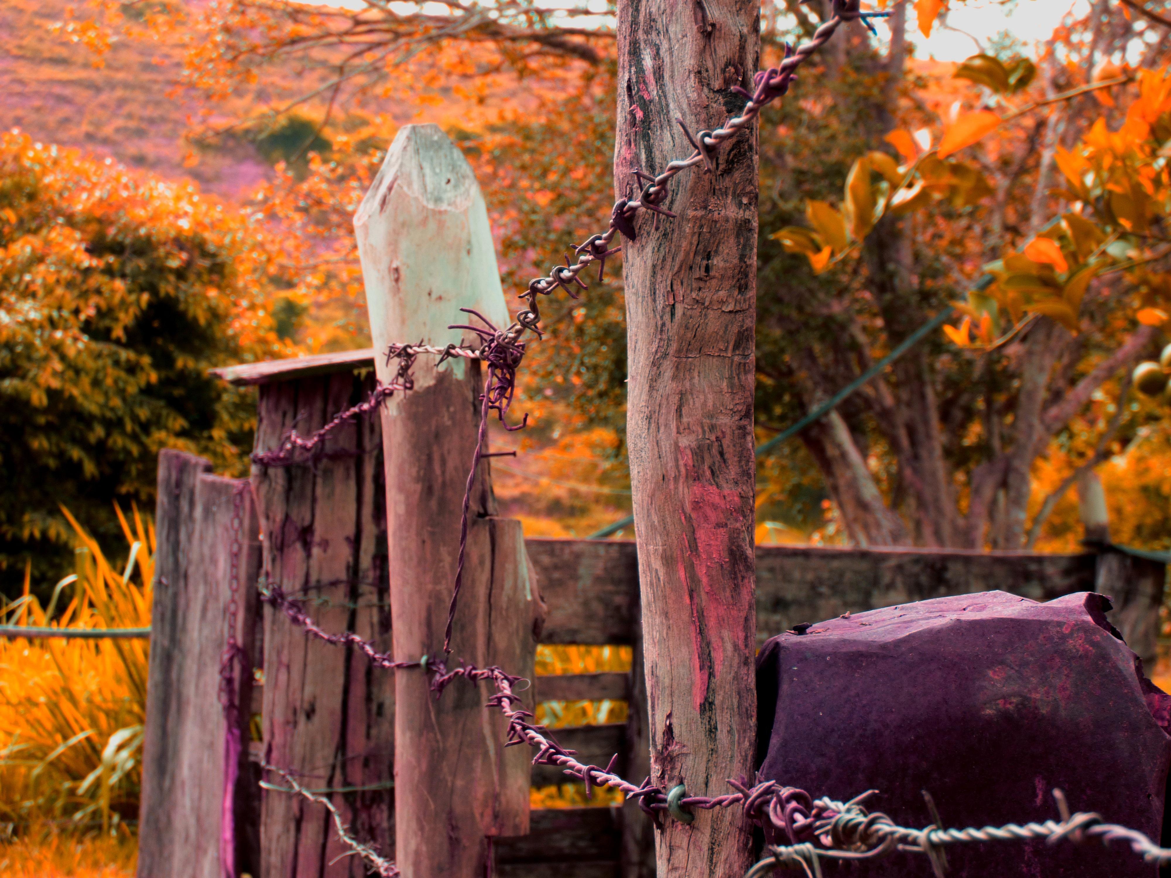 Kostenlose foto : Baum, Holz, Bauernhof, Blatt, Blume, alt, Draht ...