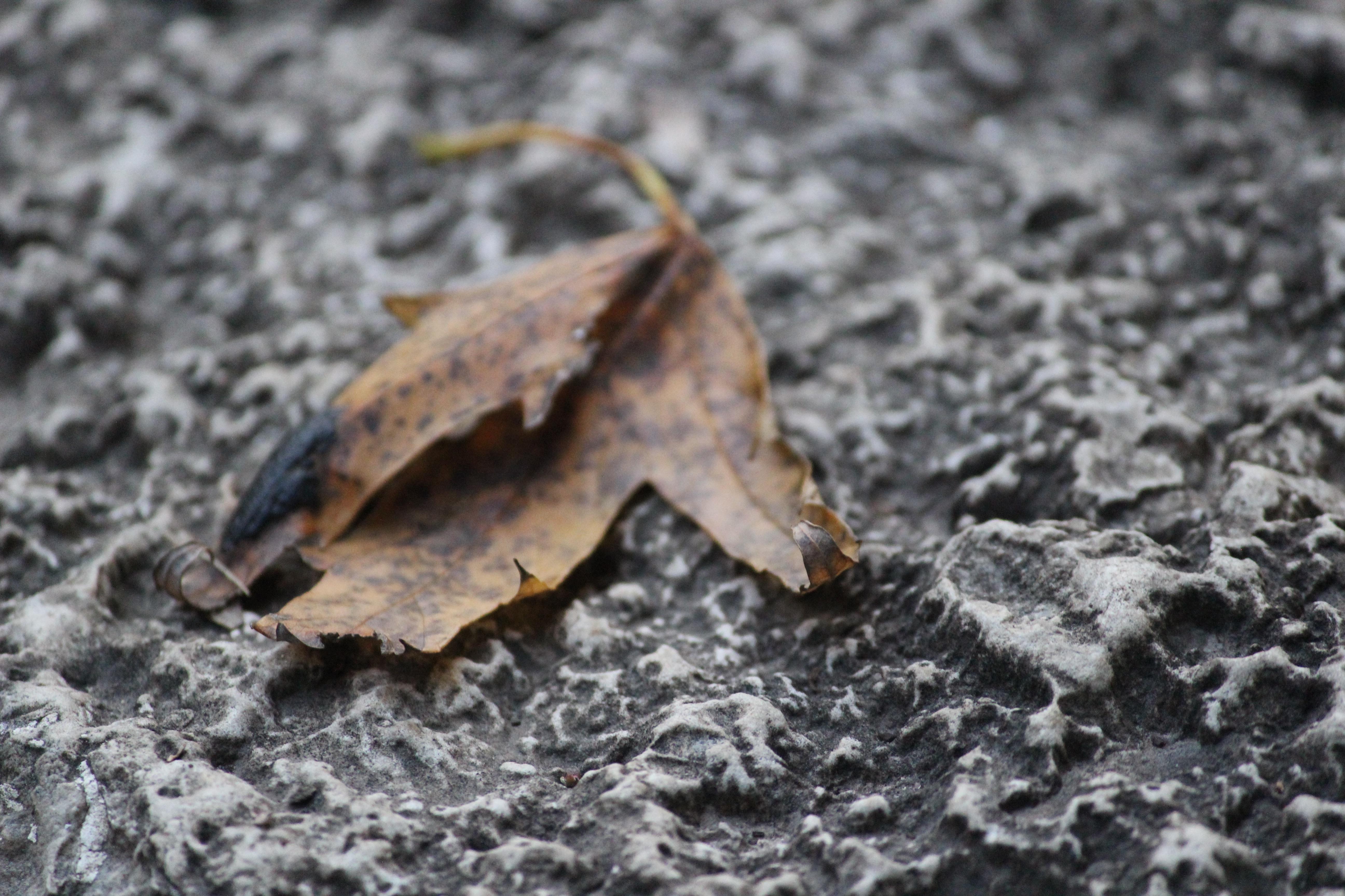 Fotos Gratis Rbol Madera Hoja Insecto Suelo Polilla Fauna  ~ Como Son Las Polillas De La Madera