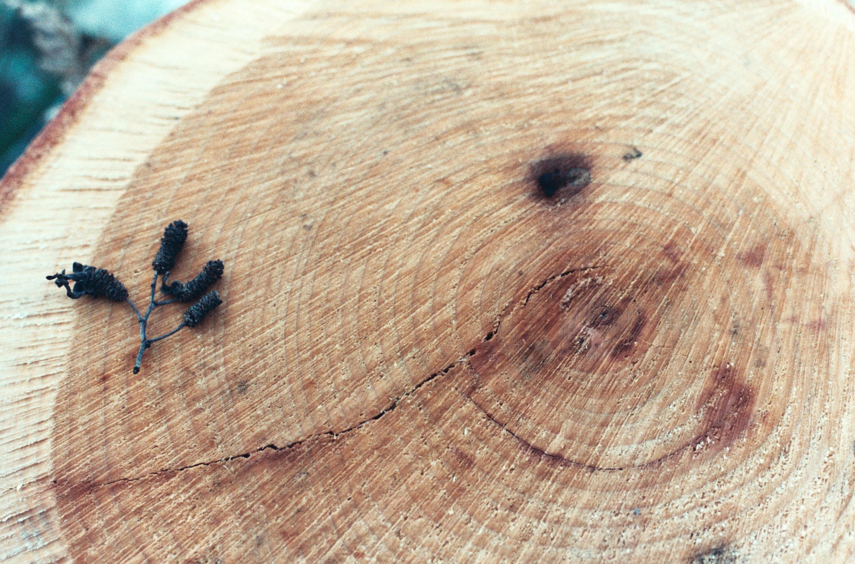 Fotos Gratis Rbol Madera Toc N Insecto Polilla Fauna  ~ Como Son Las Polillas De La Madera