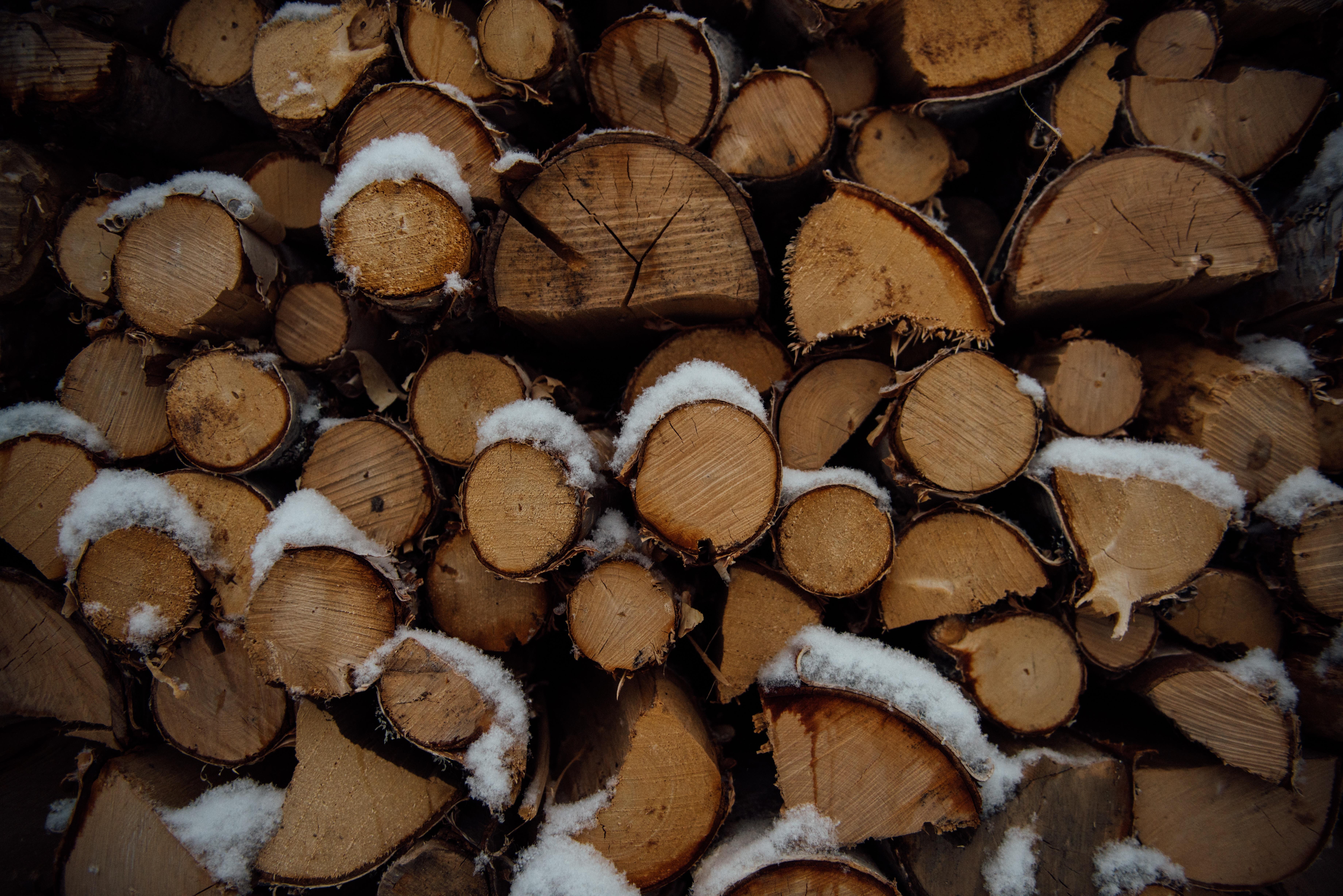 Images gratuites arbre texture pile b che aliments champignon bois de chauffage noix de - Arbre fruitier comme bois de chauffage ...
