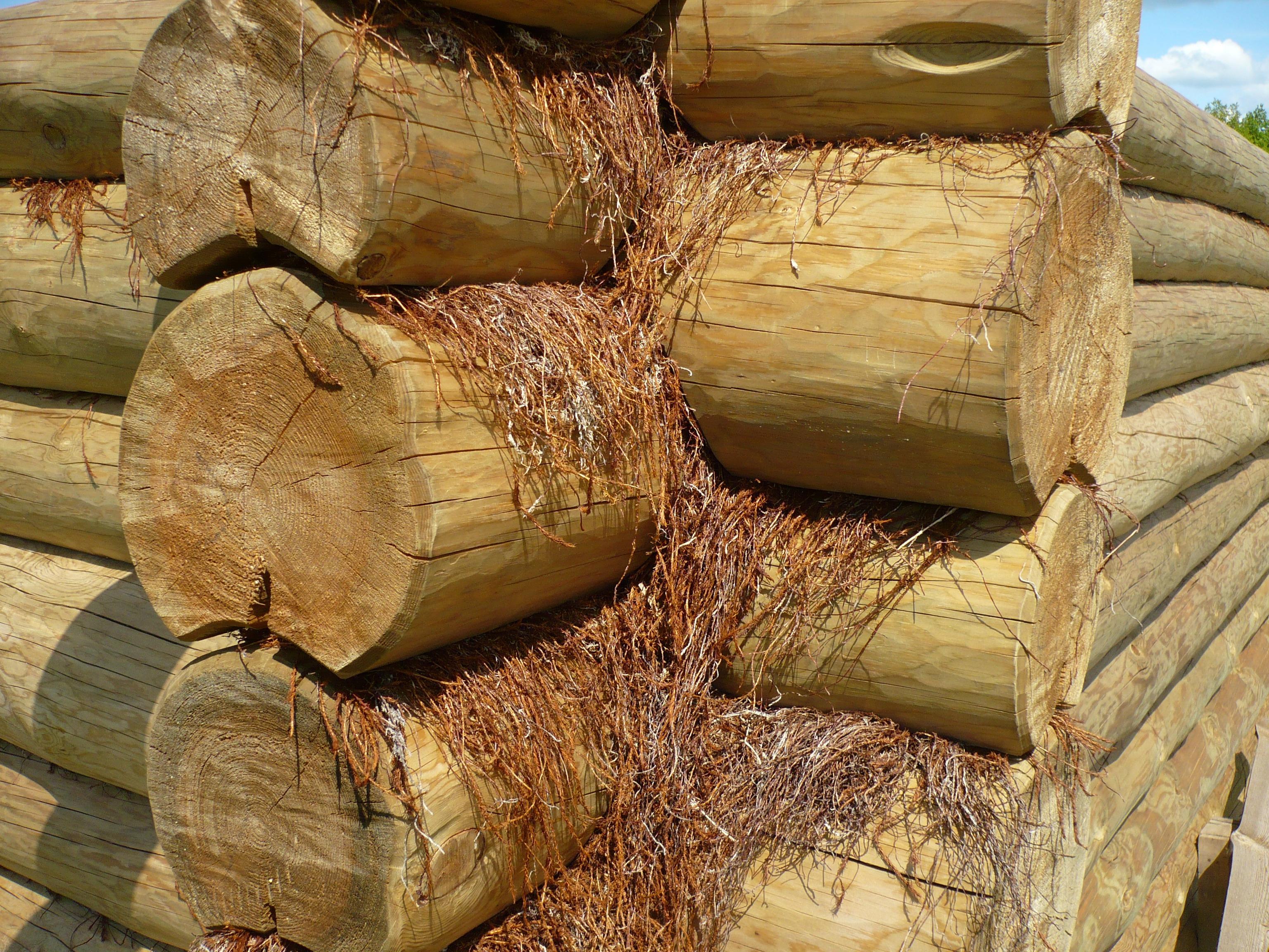 Logs logs